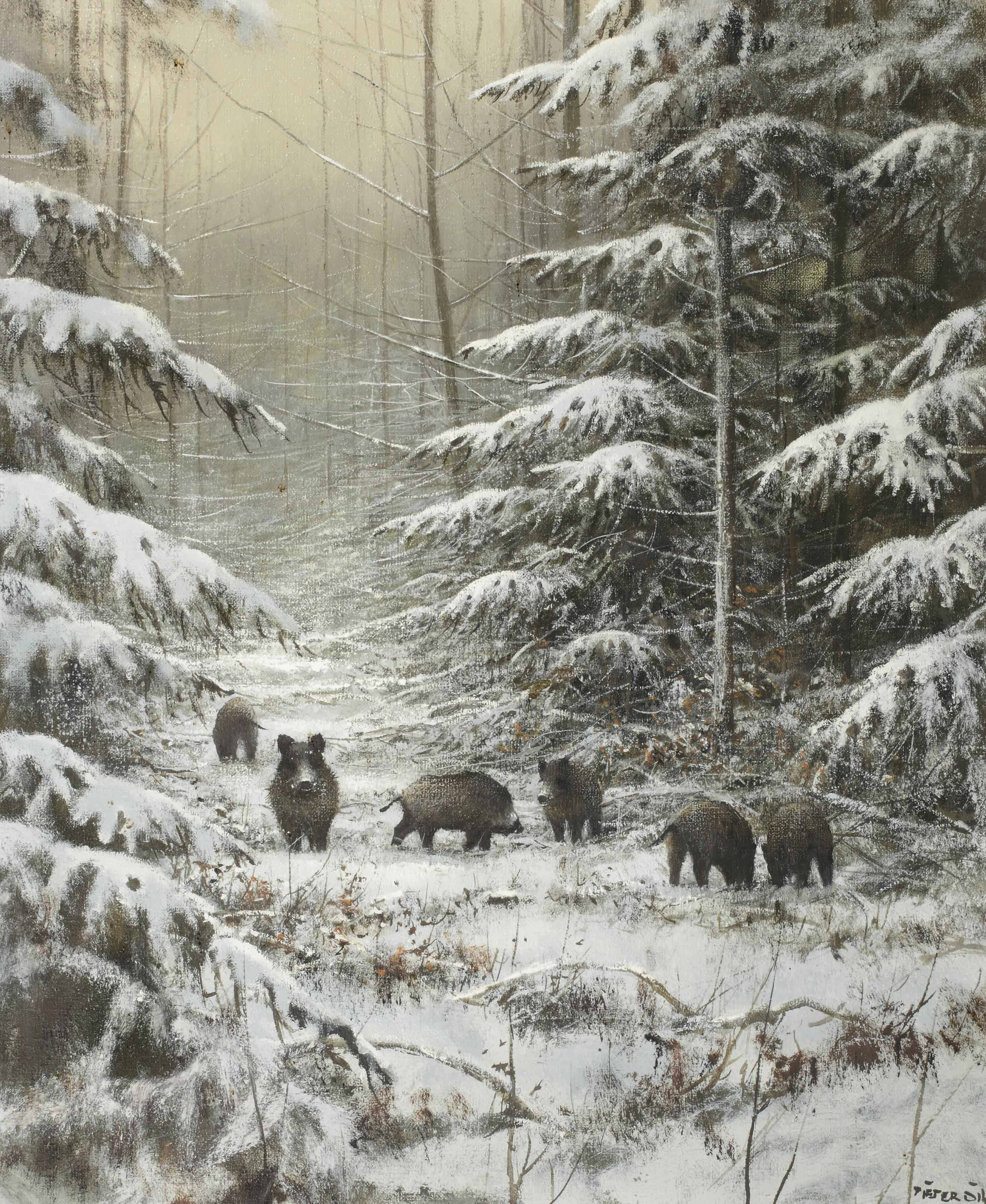 Boars in a winter landschap
