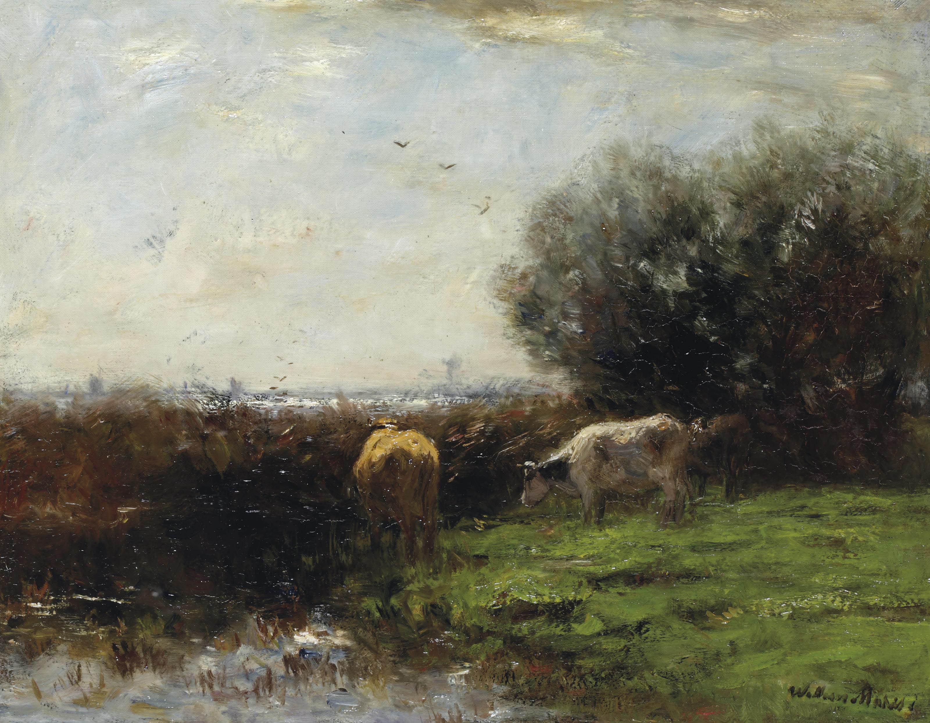Cows in Dutch polder landscape