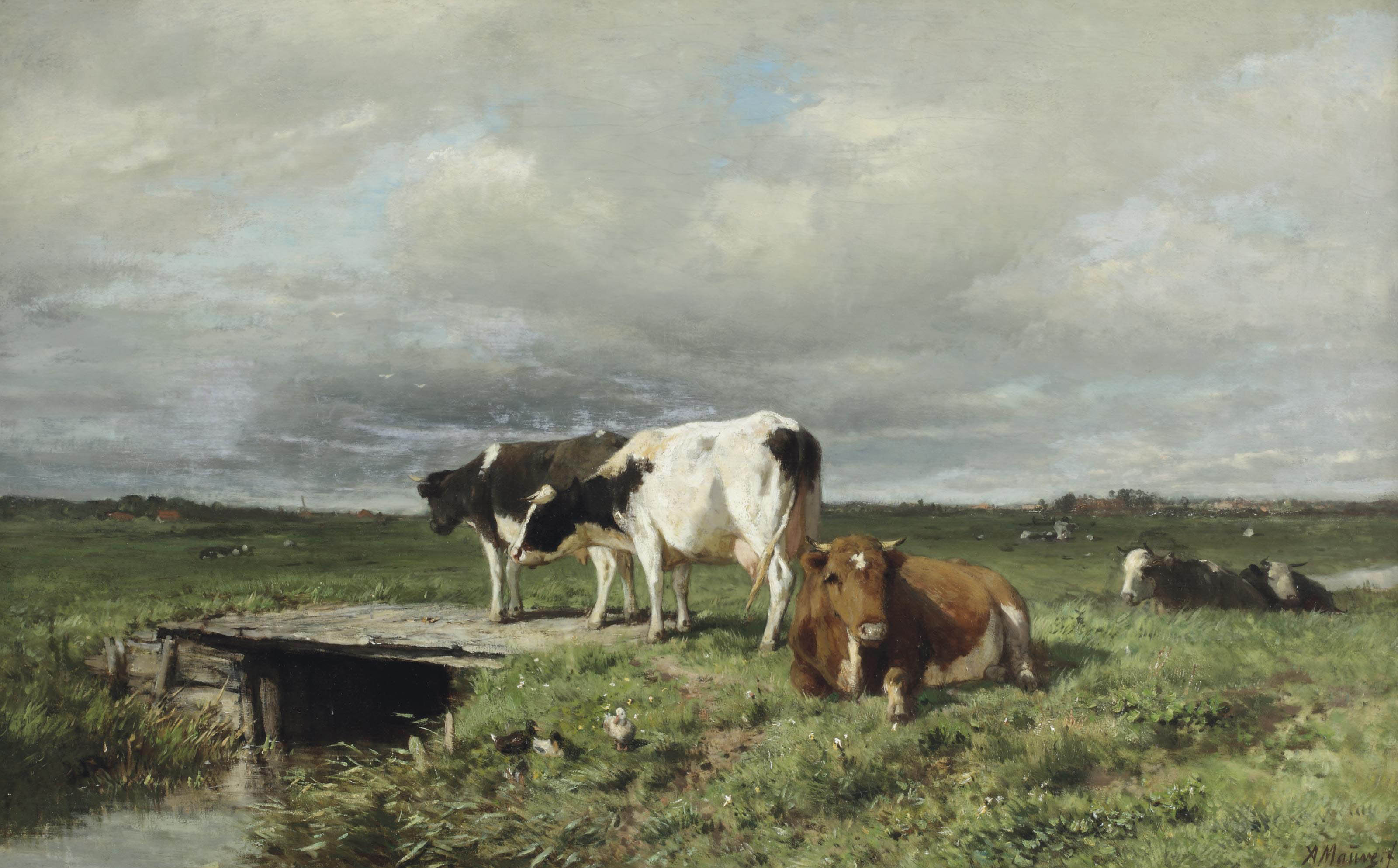 Cattle in an extensive polder landscape