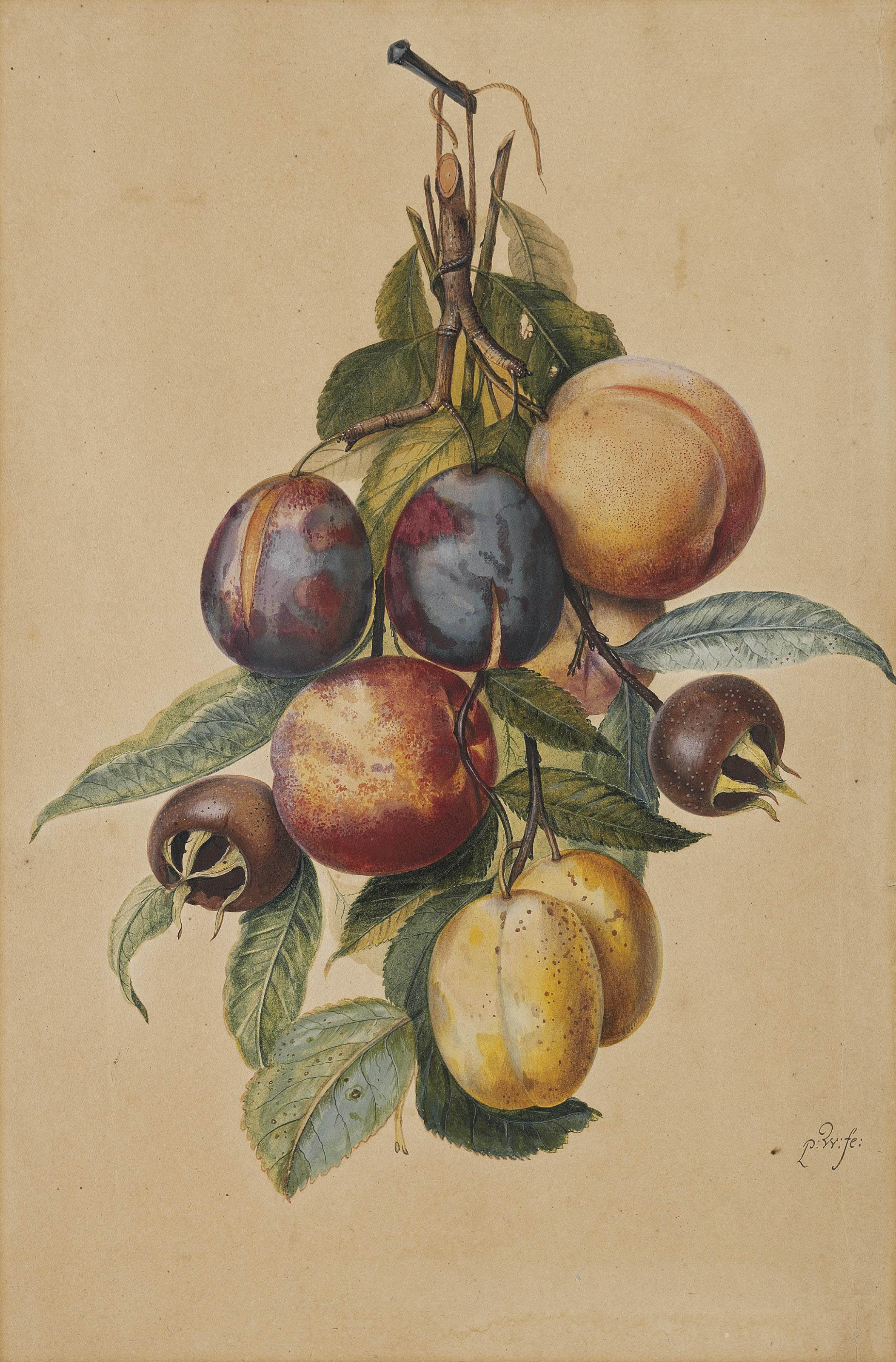 Still life with plums, white plums, peaches and medlars