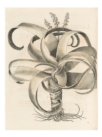 [BESLER, Basil (1561-1629). Ho