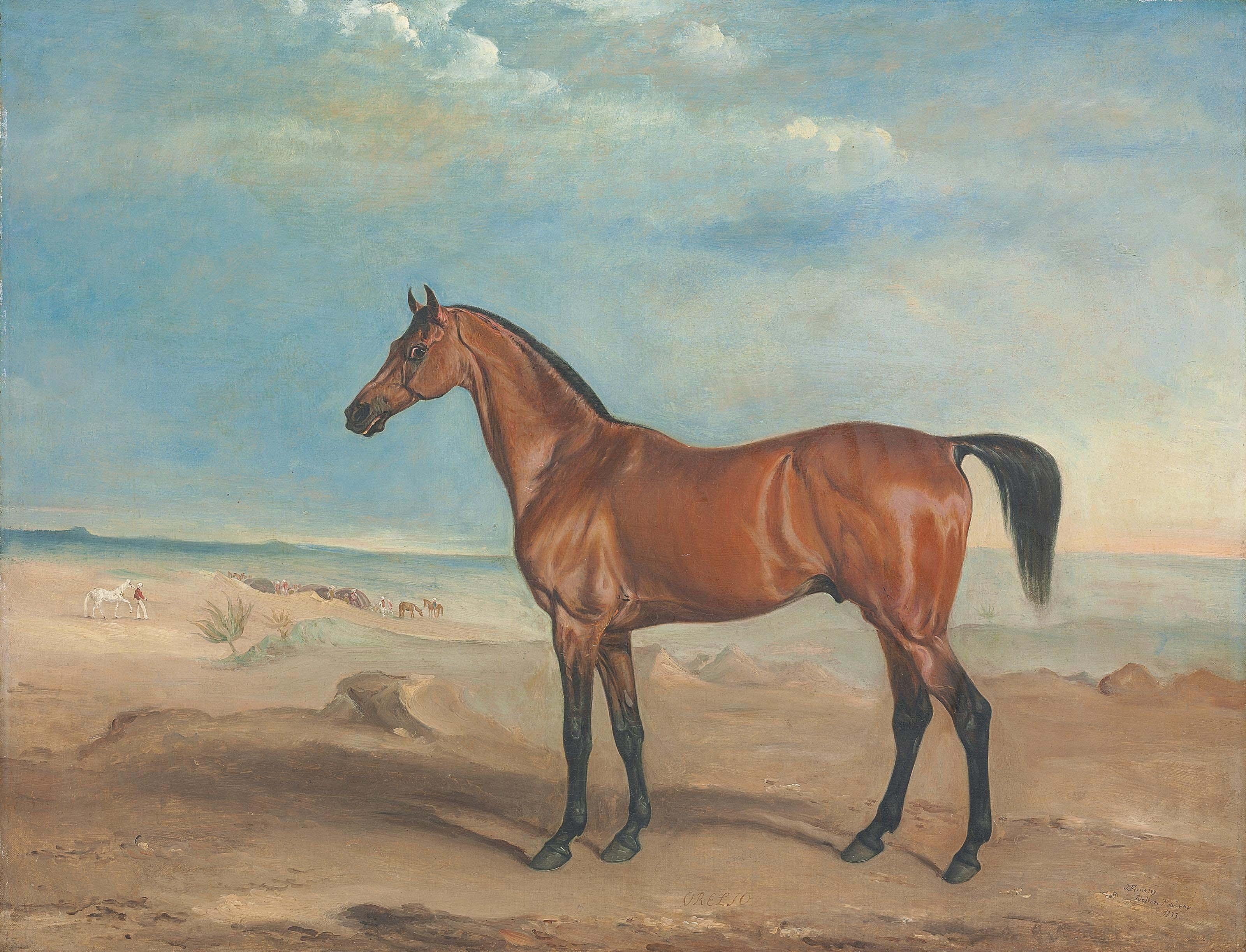 The Arab stallion 'Orelio' in a desert landscape, other horses and figures beyond