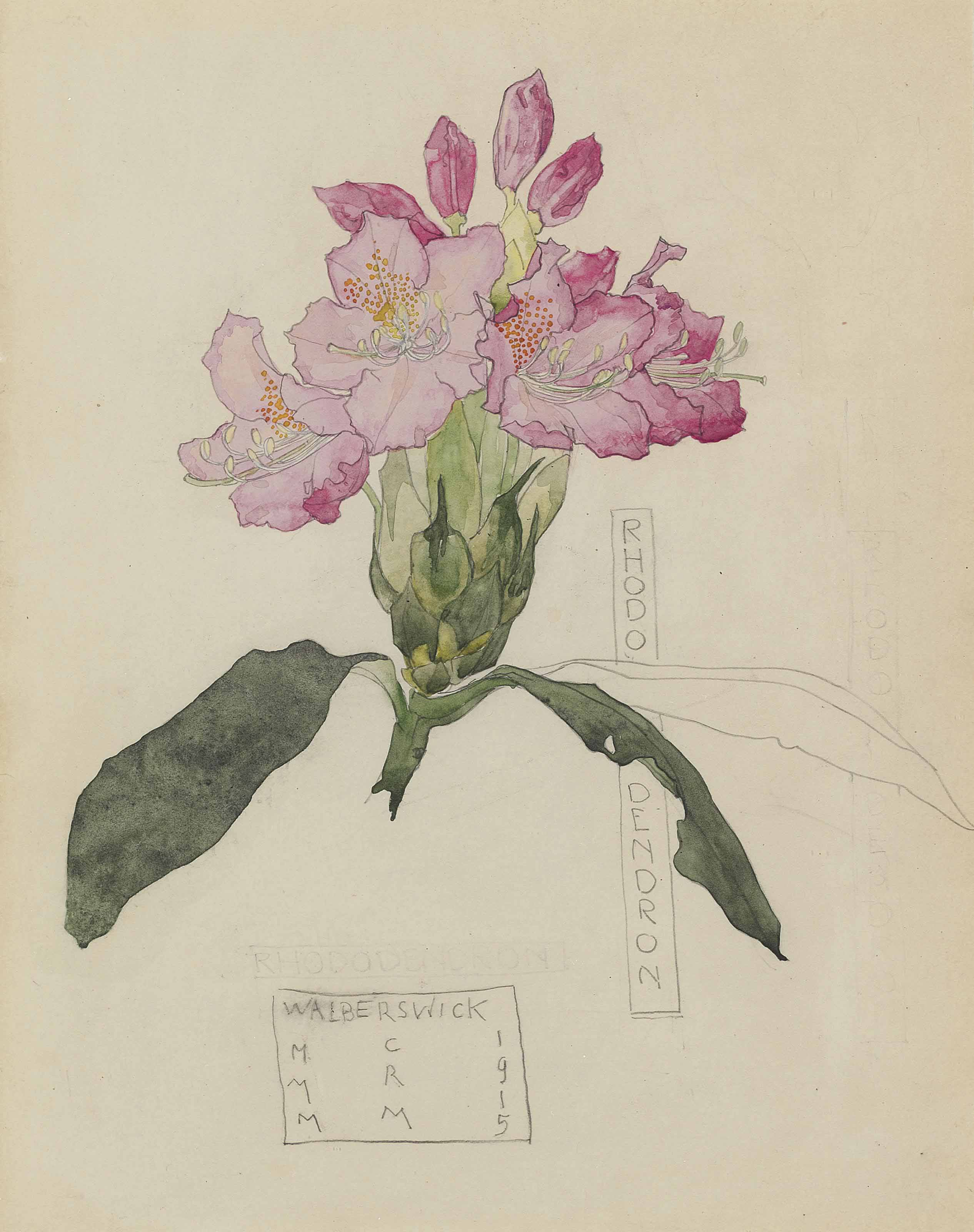 Study of a rhododendron