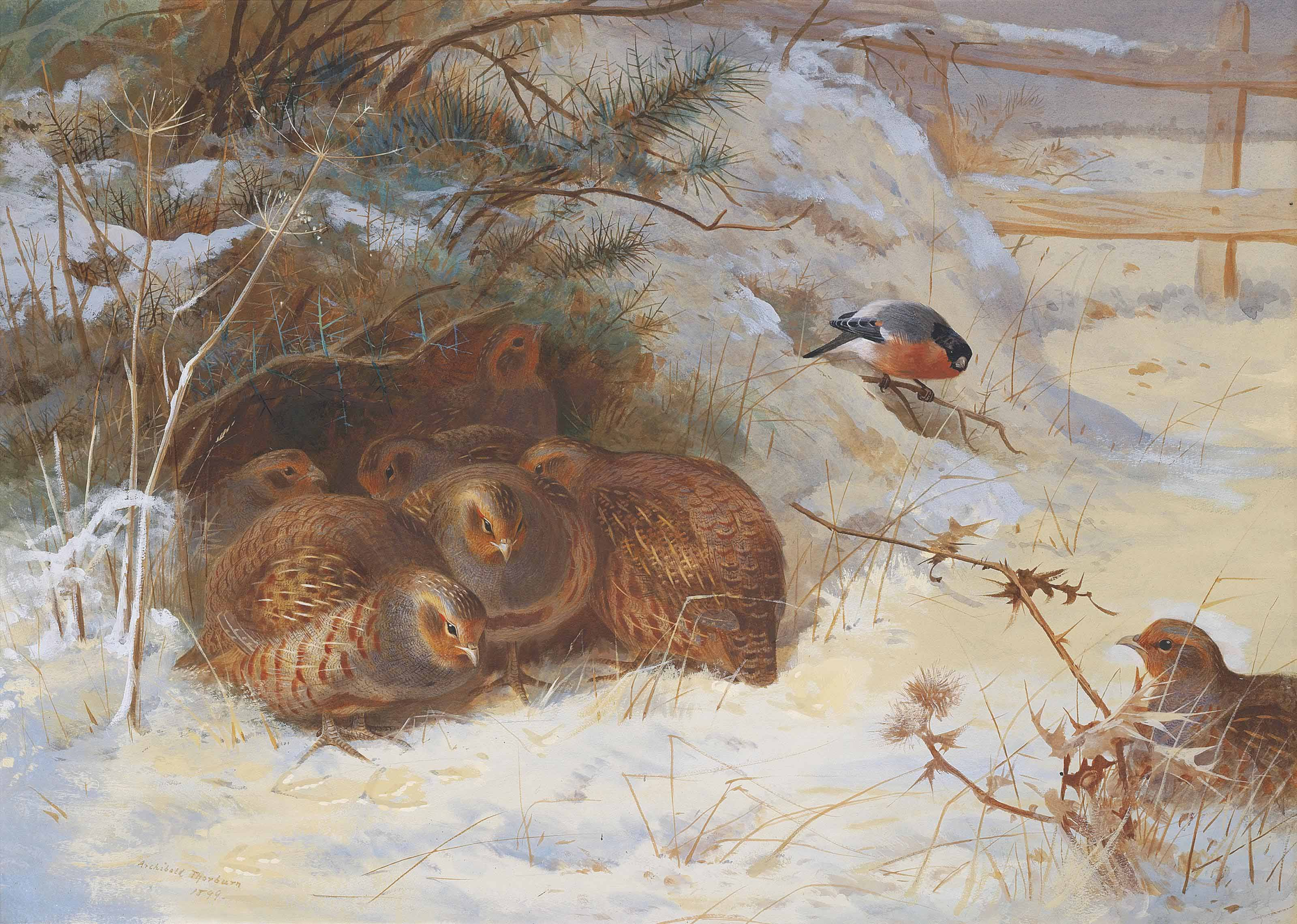 Partridge and a bullfinch in the snow