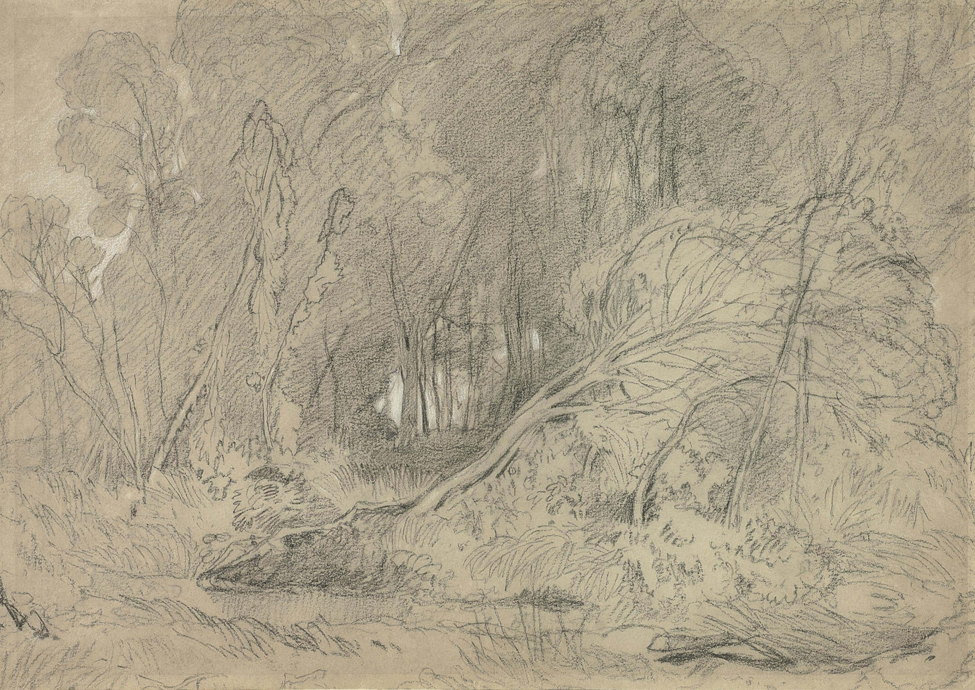 A clearing in a wood