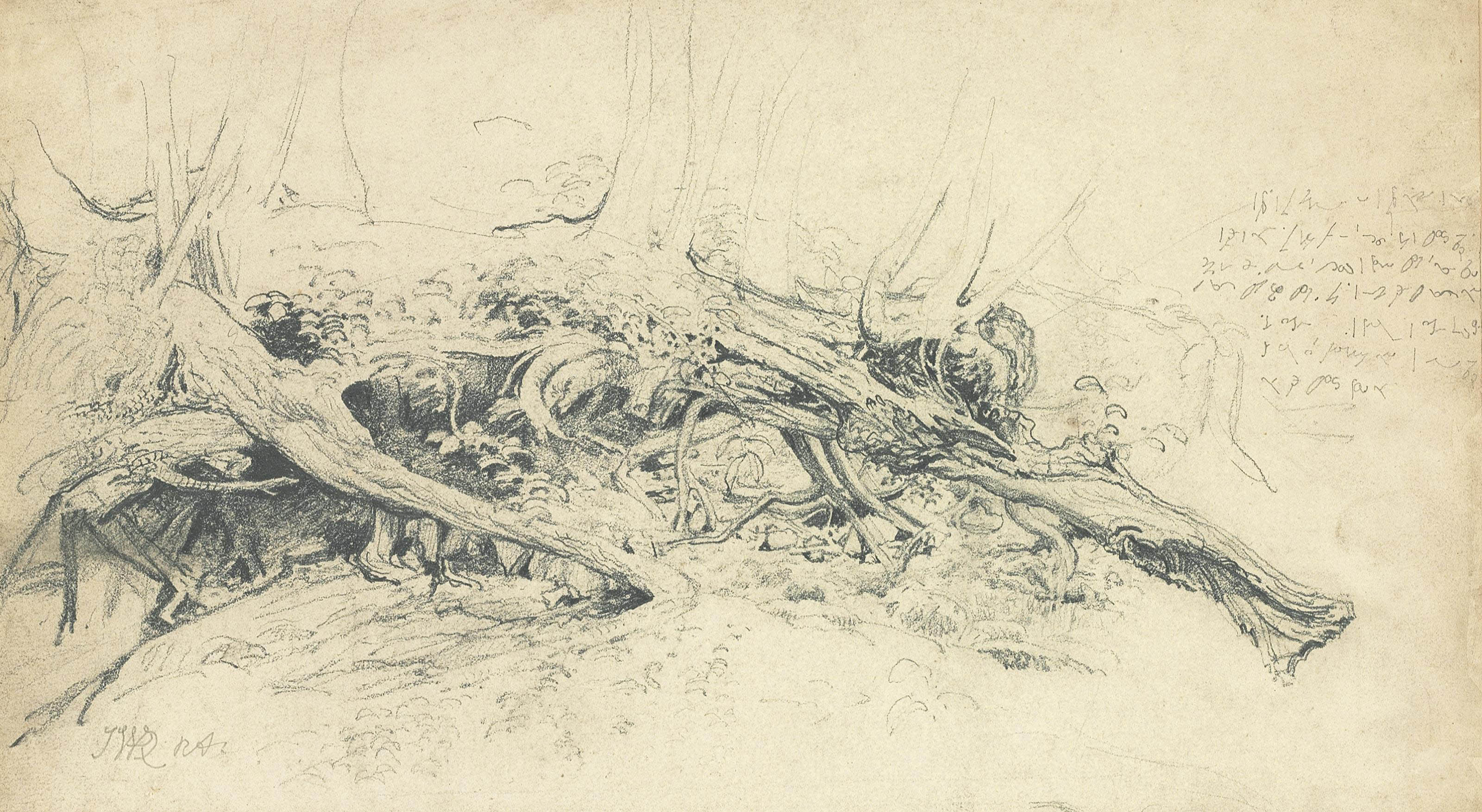A fallen tree with exposed roots