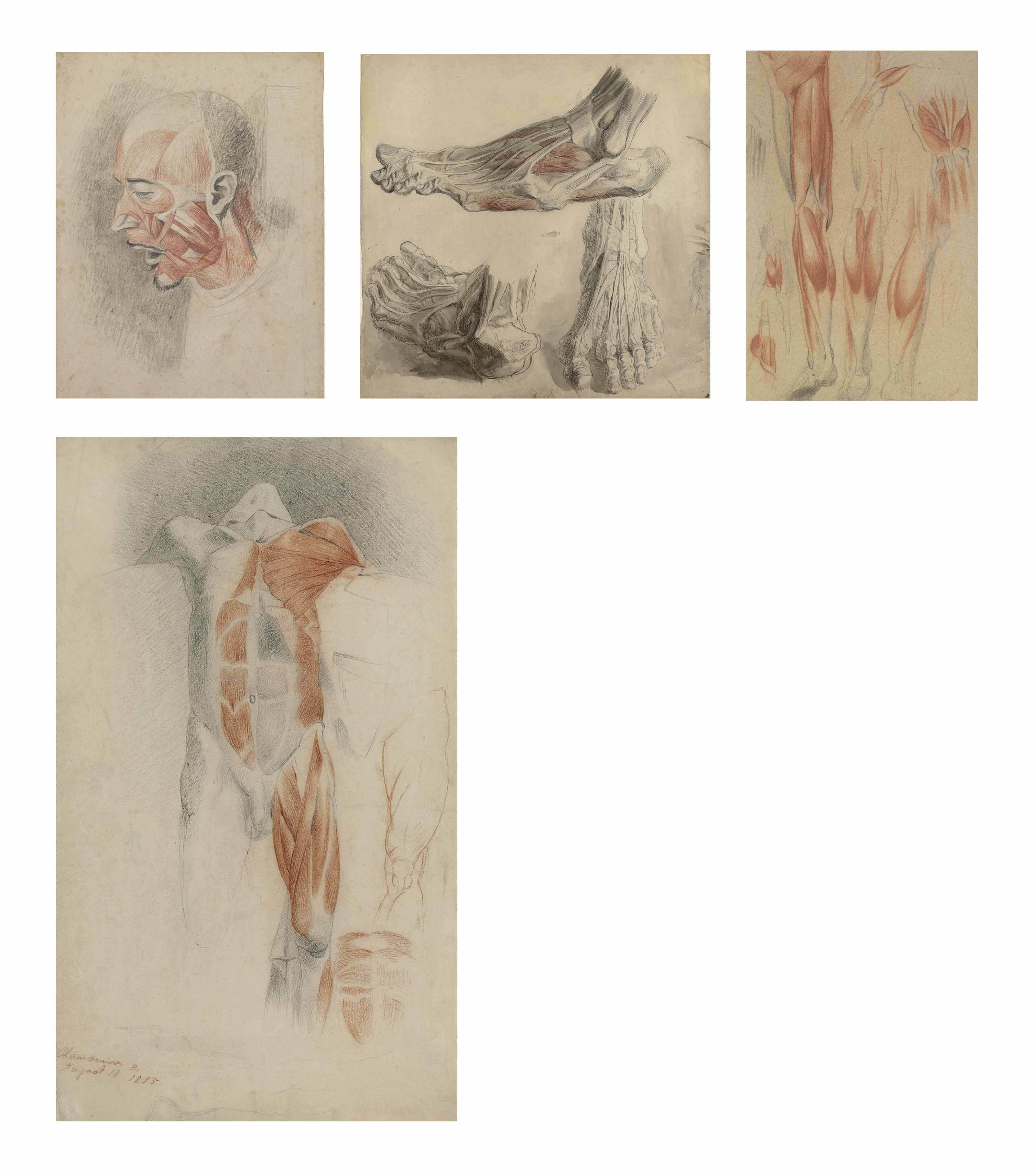 A group of fourteen écorché human figure studies including: The muscles of a leg from knee to foot; A back view of a male torso, from a dissection; Studies of the bones of a foot and a knee joint; The legs of a skeleton set in walking position; A cast of an écorché foot, seen from above; Three studies of an écorché foot (illustrated); The back view of the torso of an écorché cadaver (recto) and pencil studies of the right arm and legs of a male nude model by Haydon (verso); Several studies of an écorché leg and hand, possibly after Benjamin Robert Haydon (illustrated); A partly flayed head (recto) and unfinished chalk study of horse's head (verso) (illustrated); A partly dissected cadaver, after Haydon (illustrated); Study of a hand and the bones and muscles of the lower part of a leg (recto) and black chalk male figure studies by Haydon (verso); The muscles of a right arm; A side view of the bones and muscles of a left hand overlaid with two studies by Haydon of a man's right leg