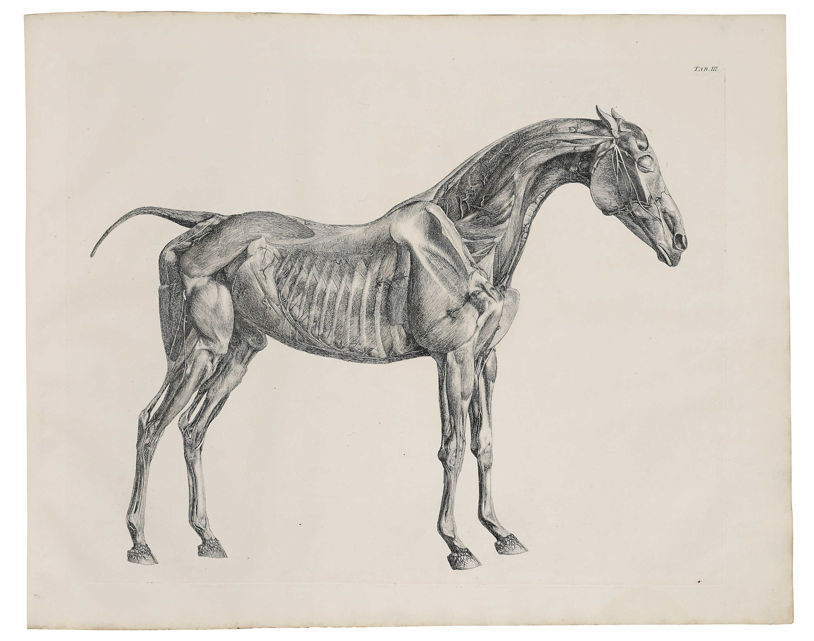 STUBBS, George (1724-1806). The Anatomy of the Horse. London: J ...