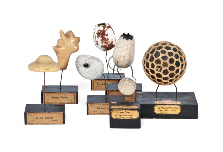 Václav Fric (1839-1916), Seven plaster models of single-celled organisms. Sold for £8,750 on 25 April 2012 at Christies in London