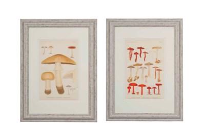 TWELVE LITHOGRAPHS OF FUNGI