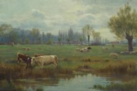Cattle and sheep in a watermeadow