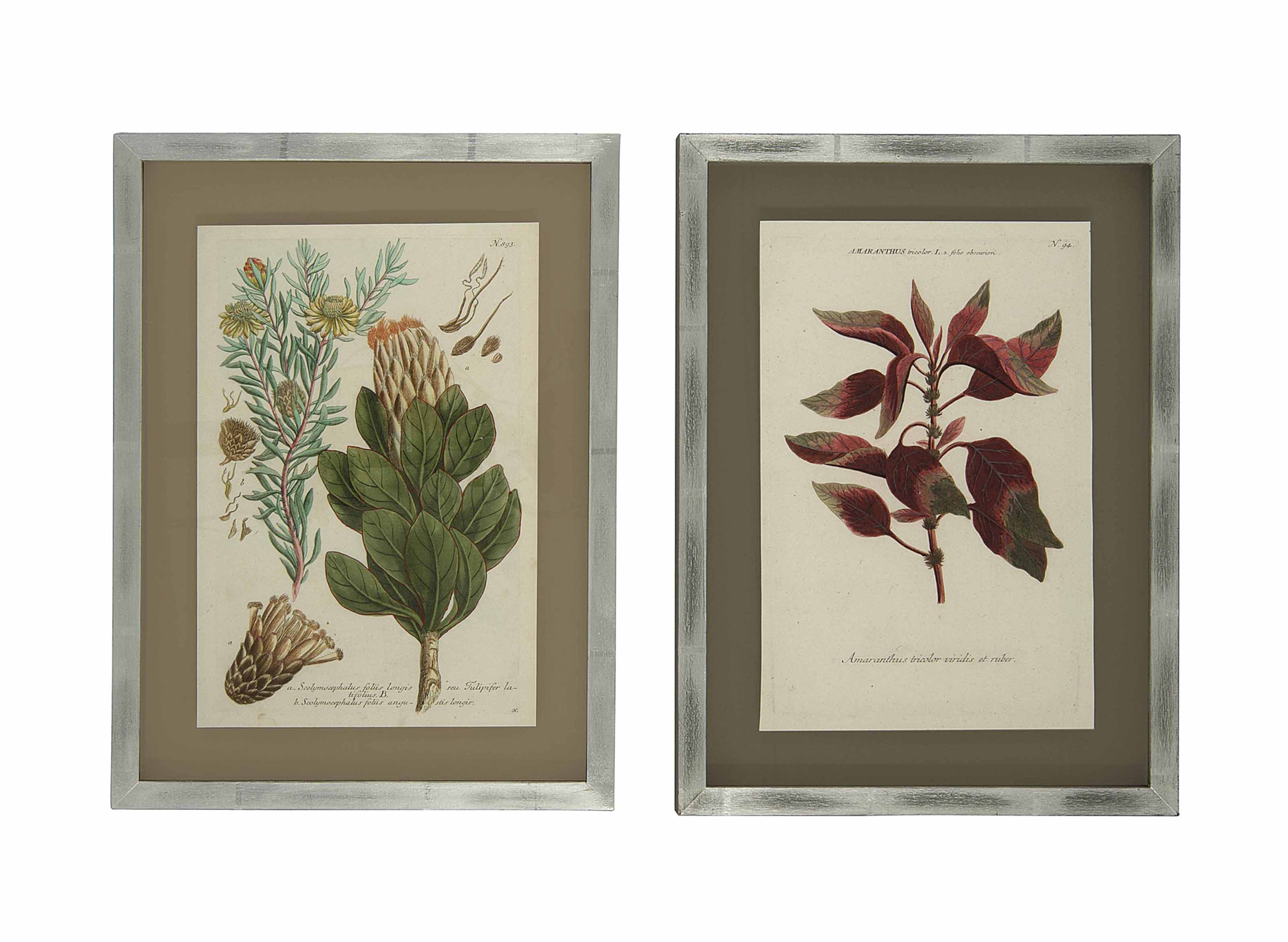 TWELVE BOTANICAL MEZZOTINTS PR