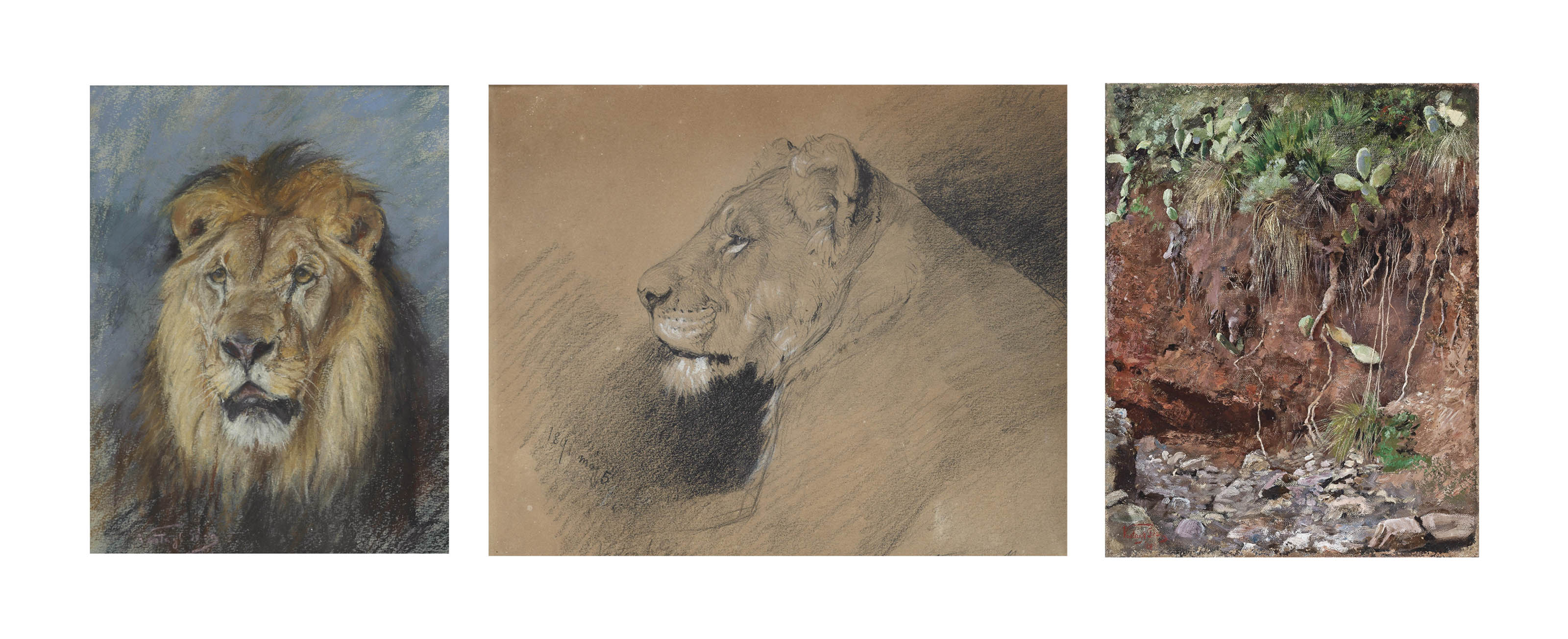Geza Vastagh (HUNGARIAN, 1866-1919) , A Lion Study