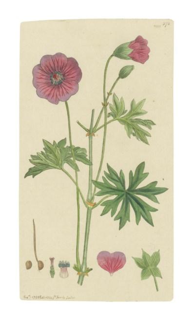 SOWERBY, James (1757-1822). En