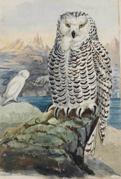 STORY MASKELYNE, Thereza (1834
