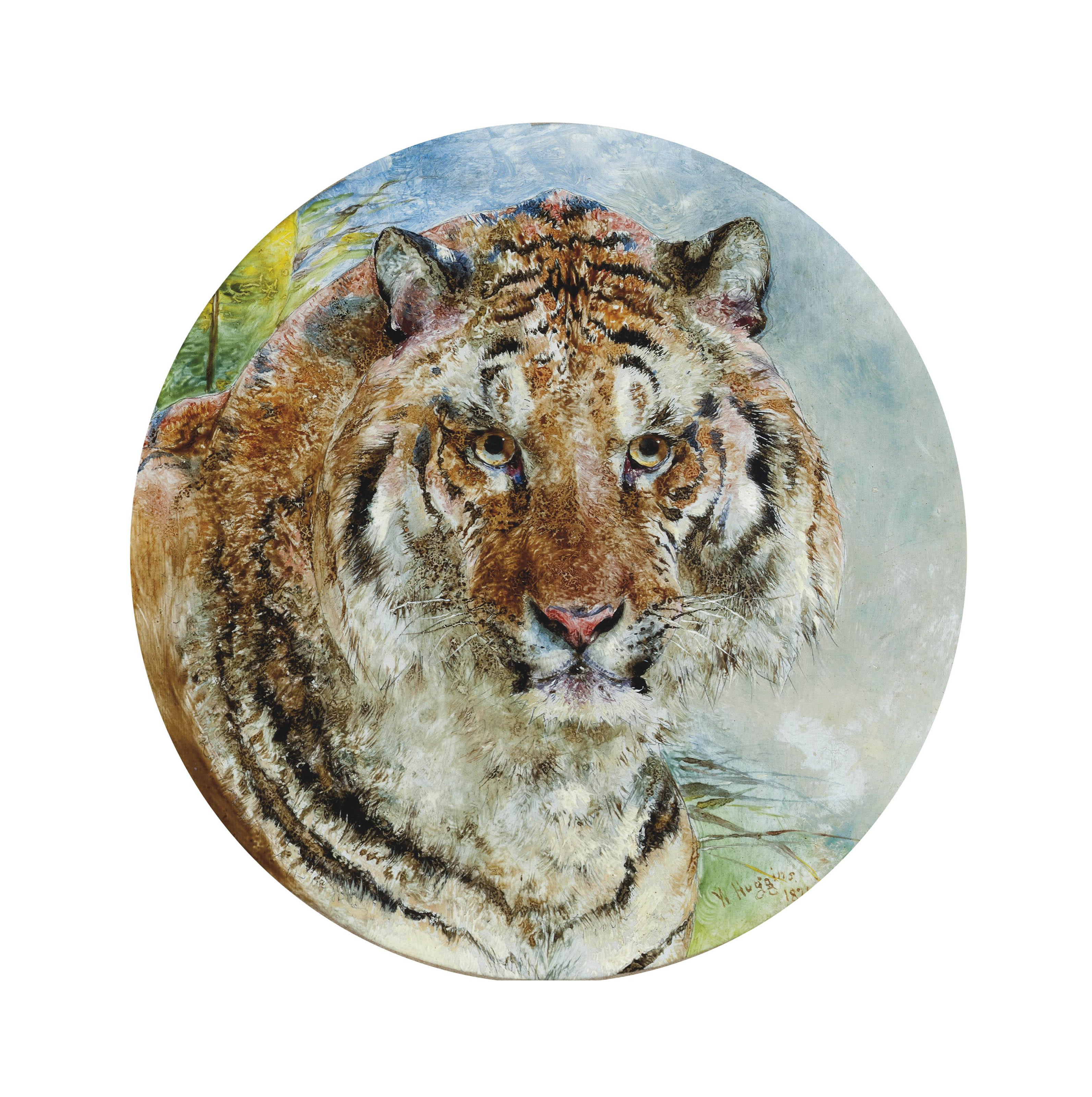 Head of a tiger