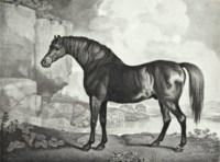 Baronet; Sharke; Sweetwilliam; and Maske