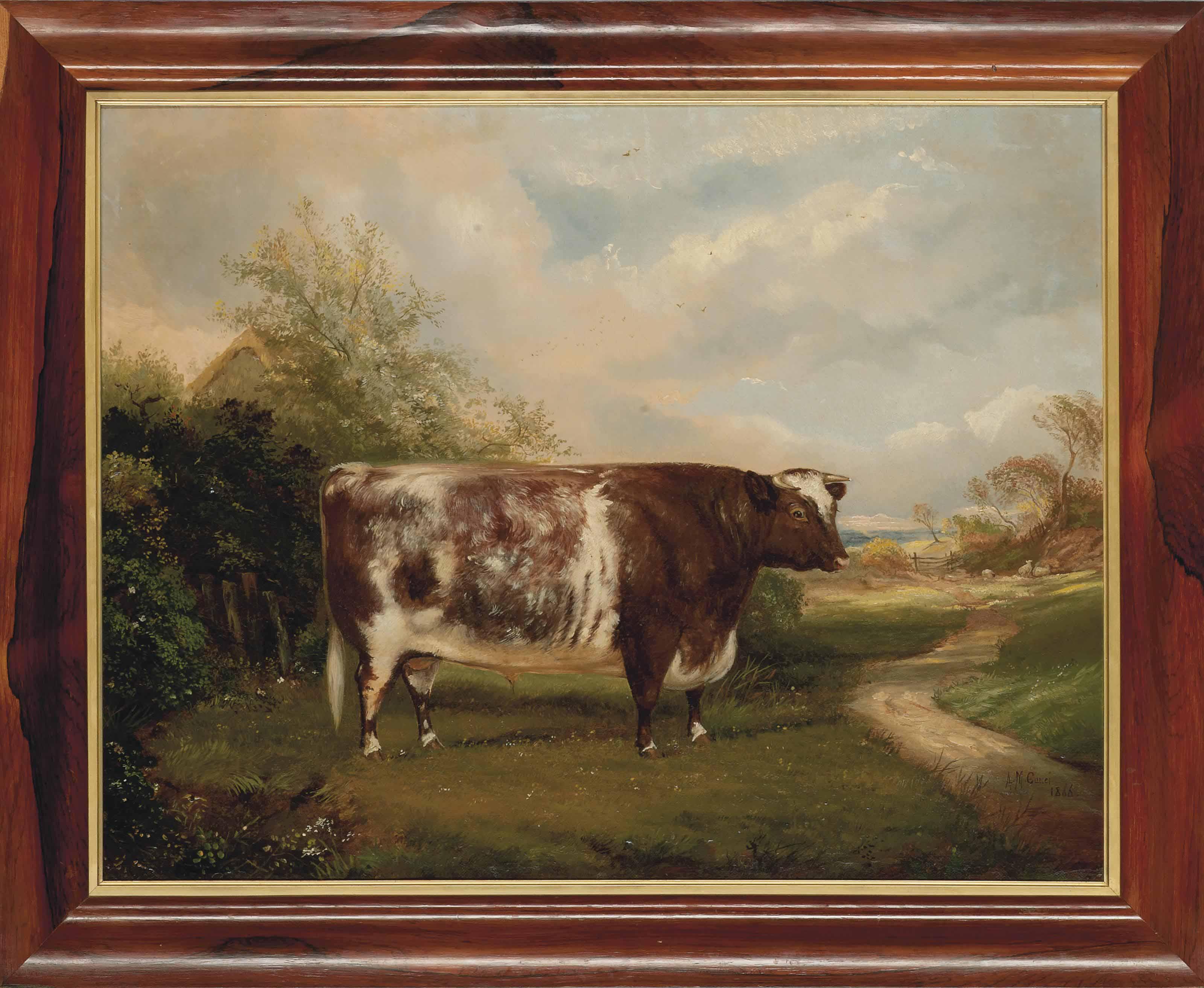 A short-horn bull in a landscape