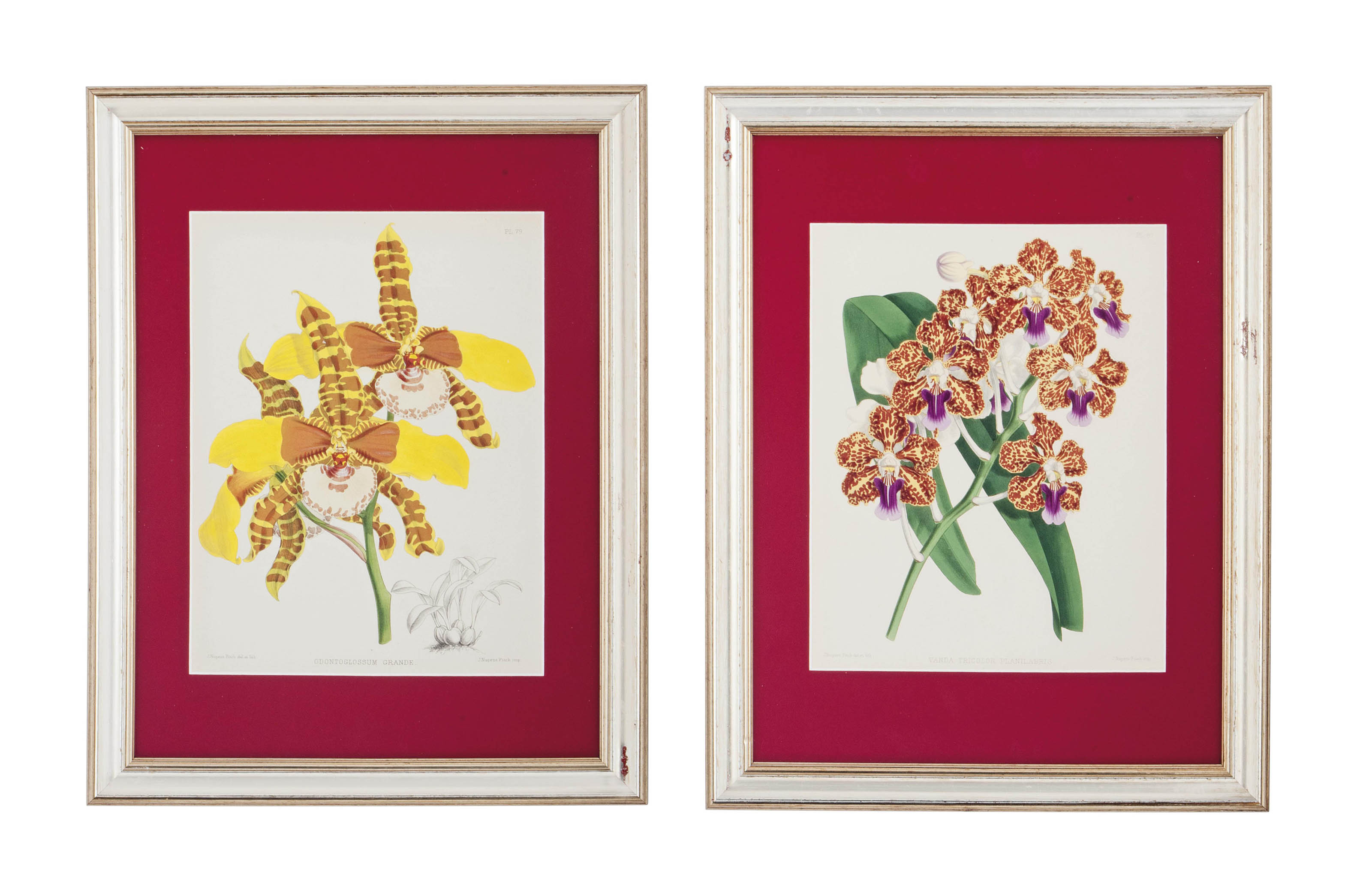 TEN HAND-COLOURED LITHOGRAPHS OF ORCHIDS