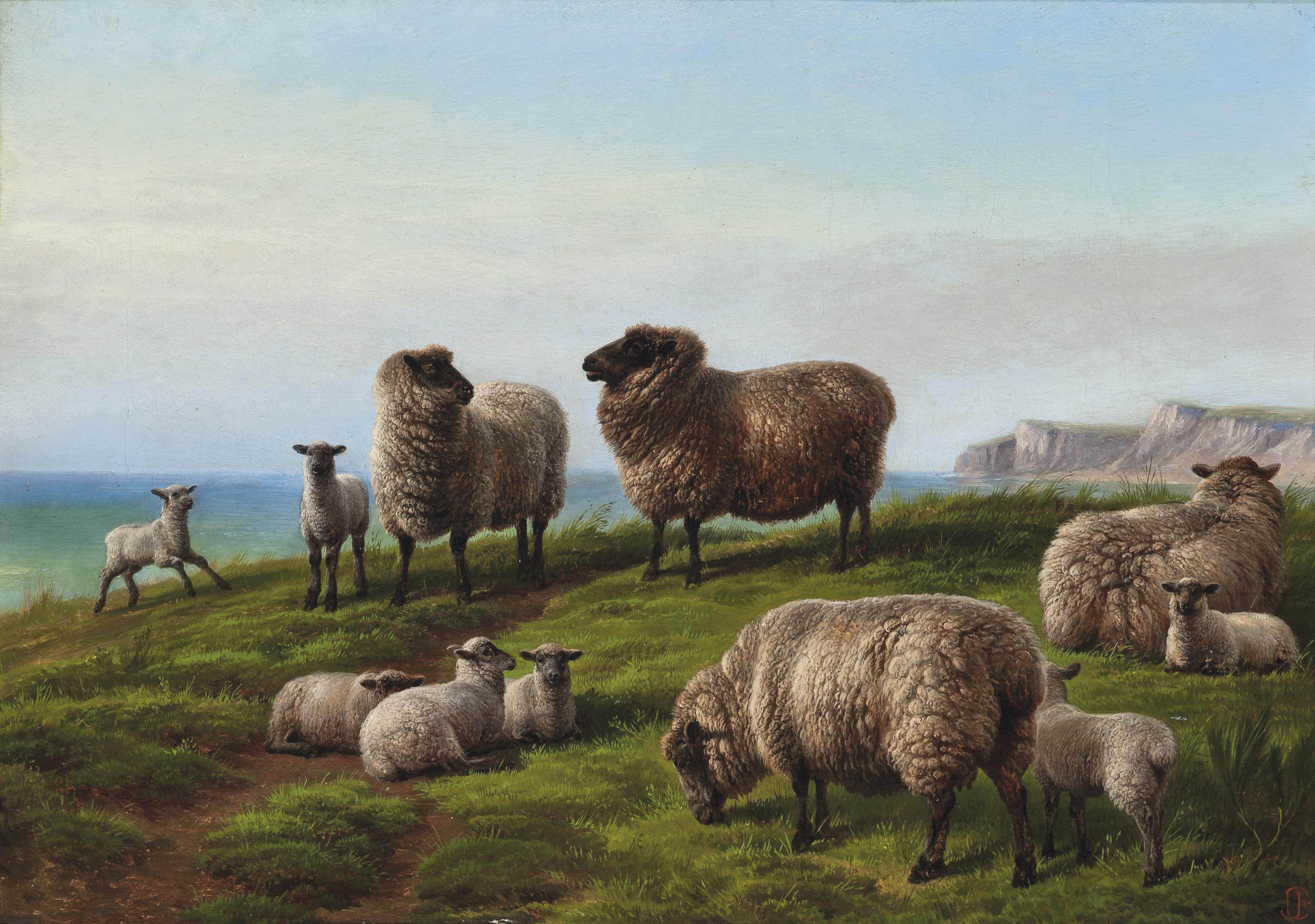 Sheep grazing on a headland