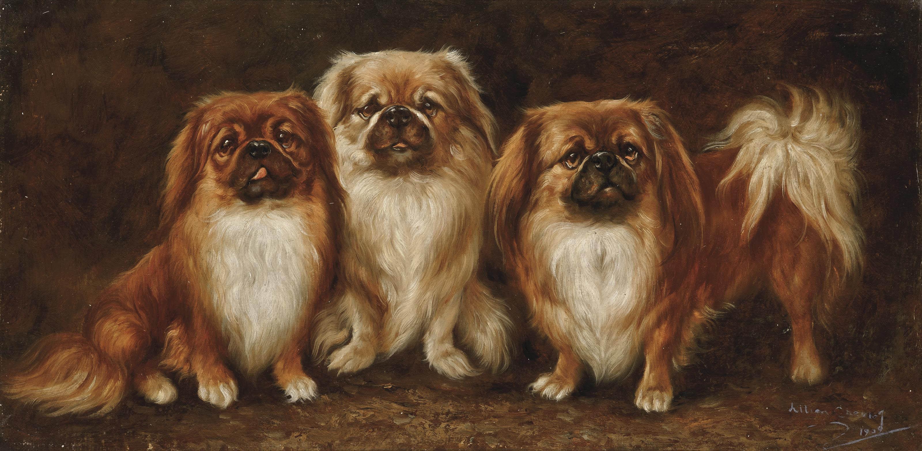 Three Pekingese