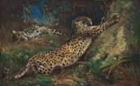 Contentment - leopards