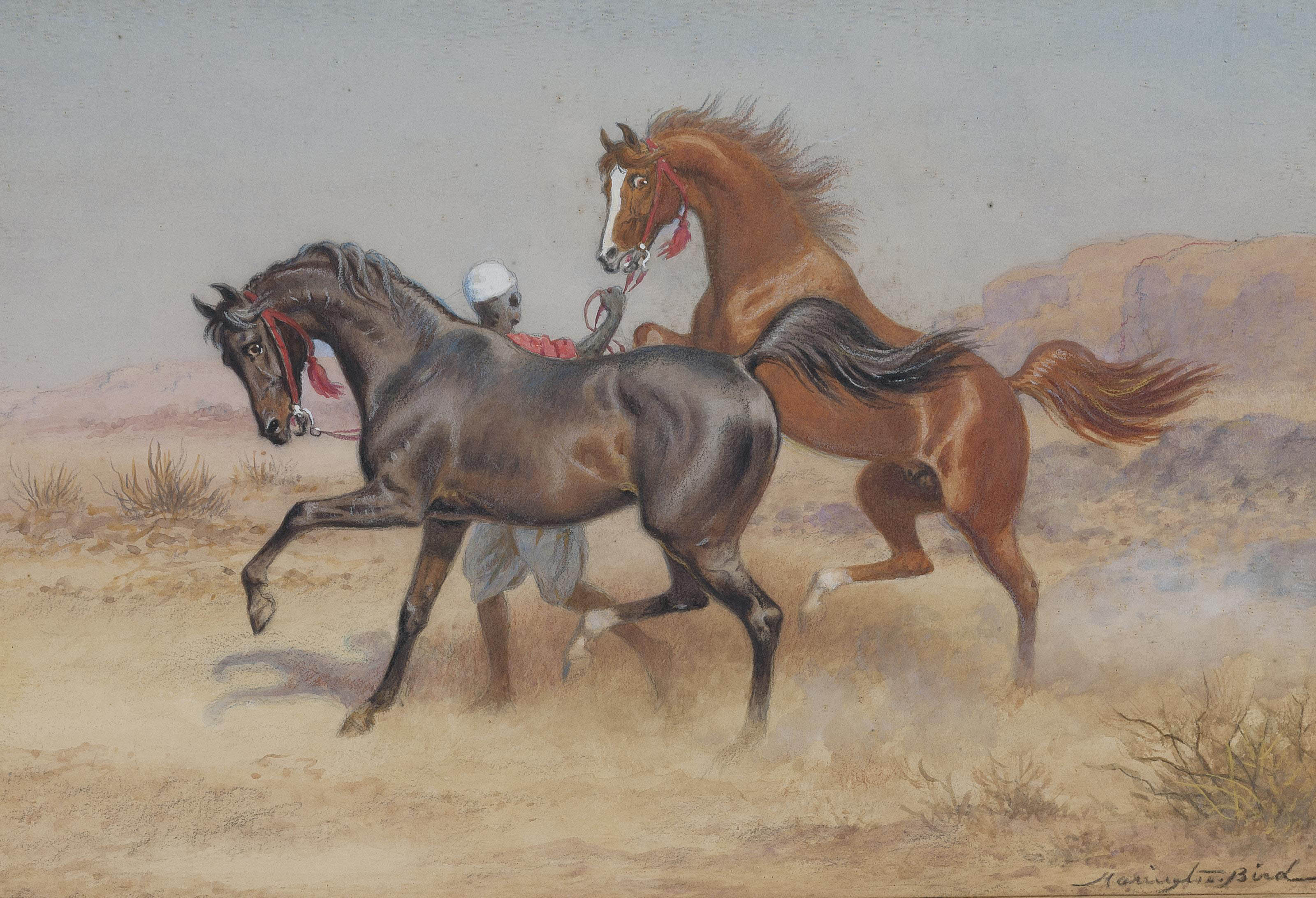 An Arab stallion and a mare with their handler in the desert