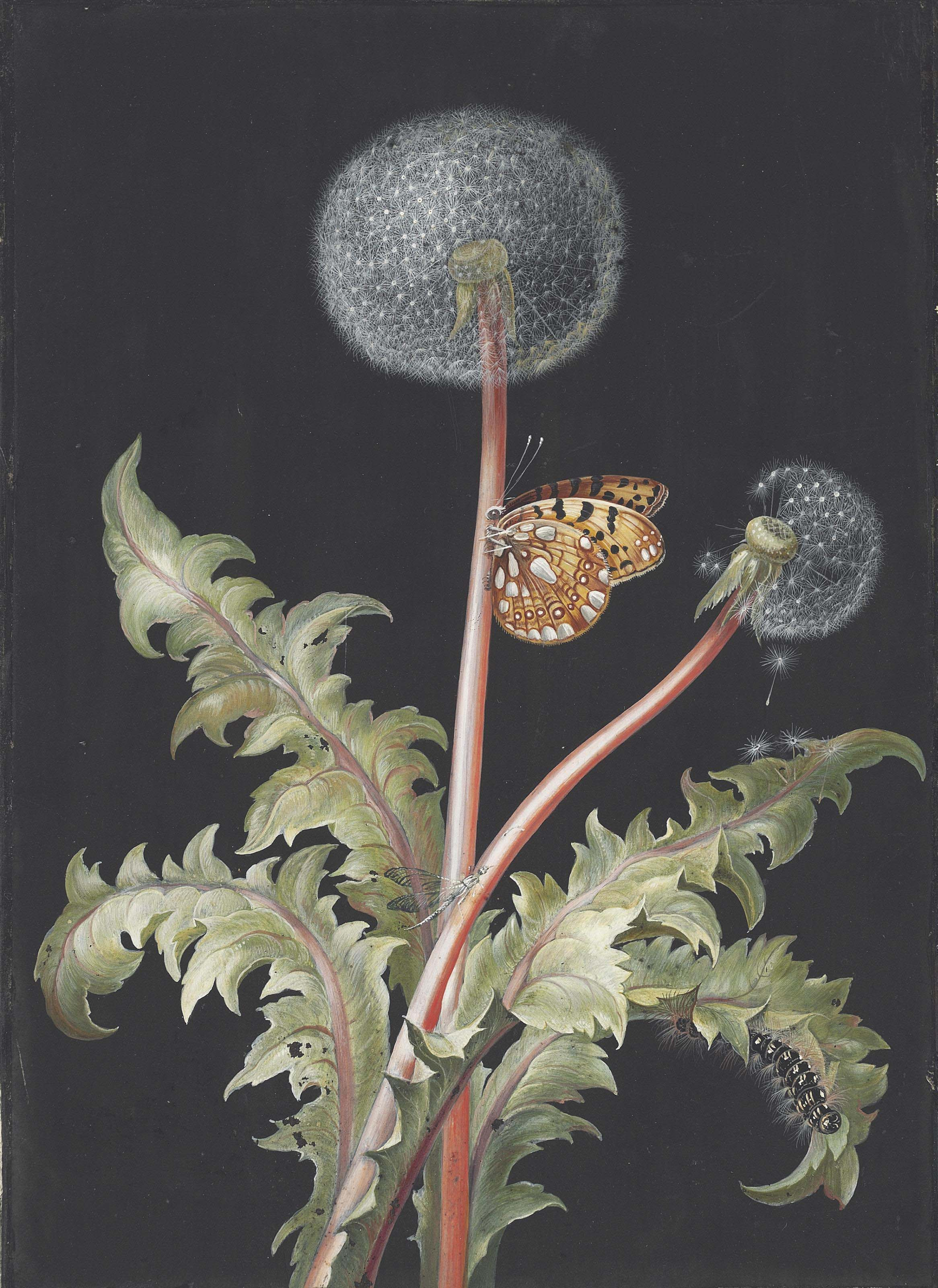 A dandelion plant in seed with a butterfly, dragonfly and caterpillar