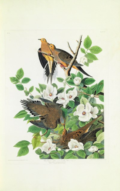 AUDUBON, John James (1785-1851