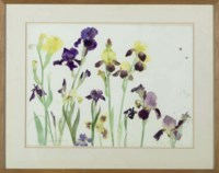 Bearded Irises, Yellow and Purple