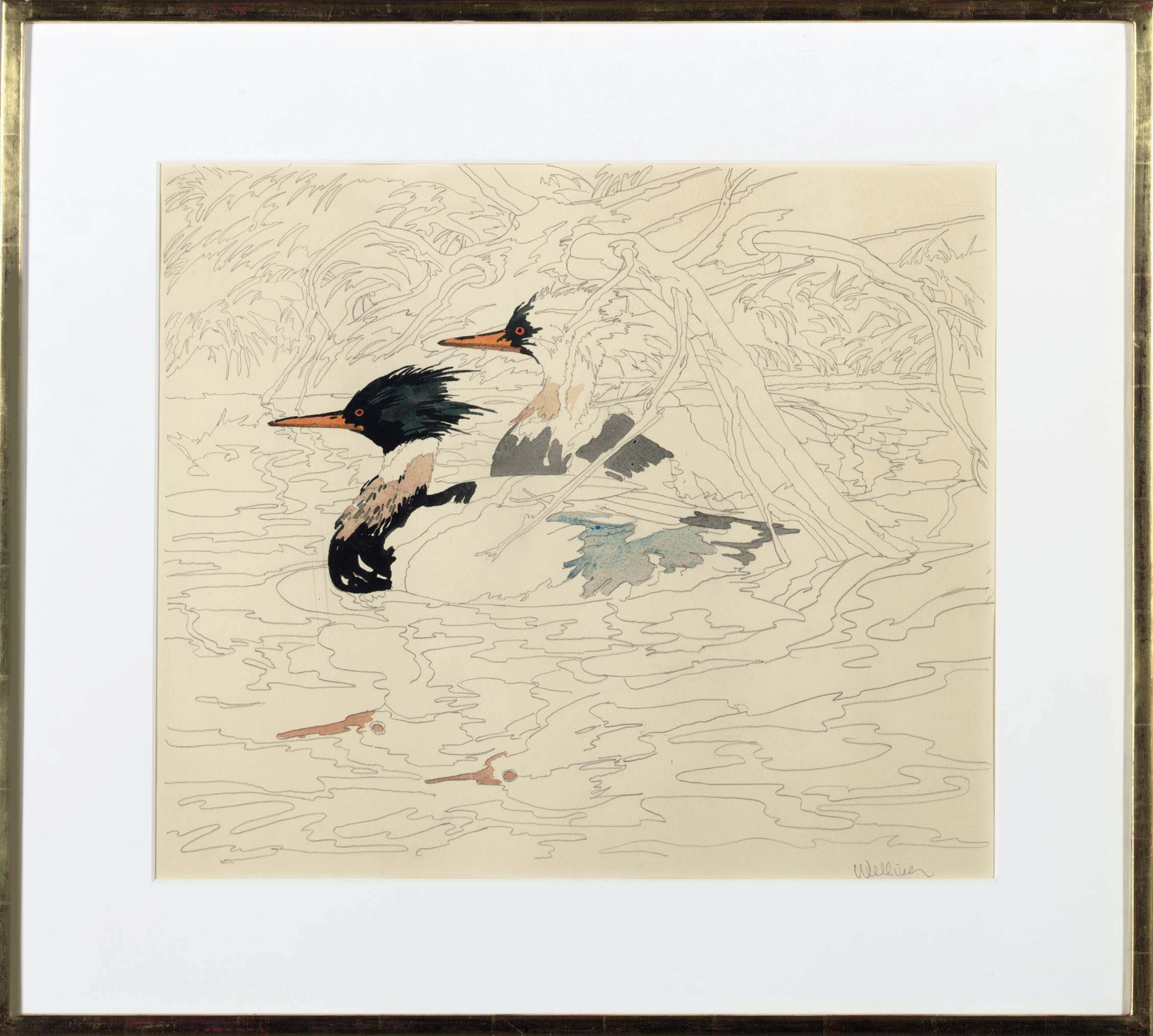 Study for Merganser
