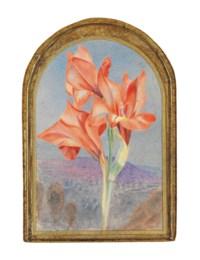 Amaryllis in a landscape