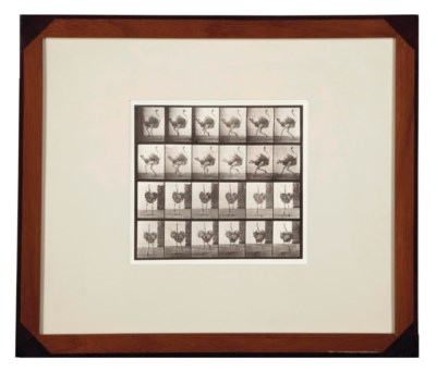 Eadweard Muybridge (1830-1904)