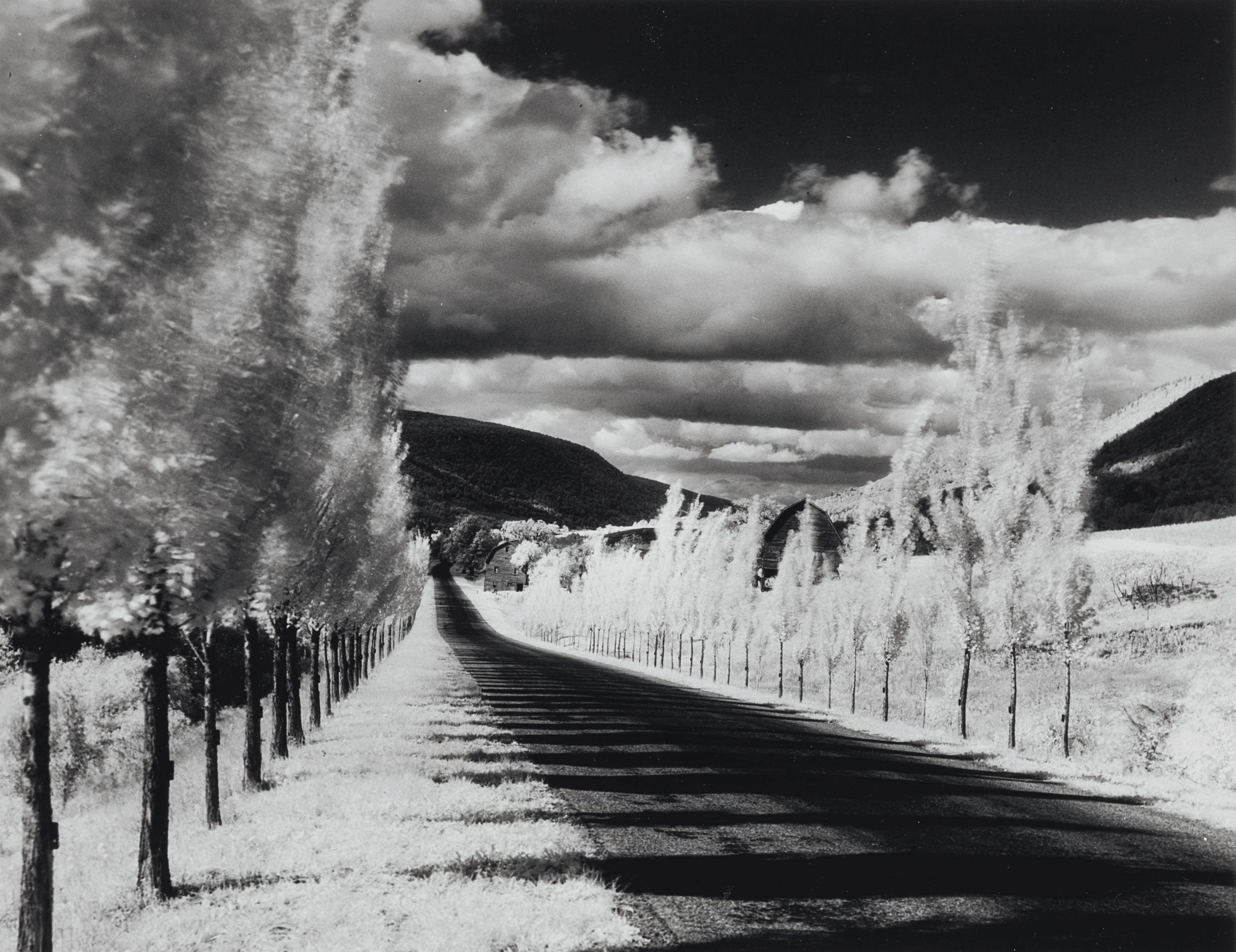 Road and Poplar Trees, in the Vicinity of Naples and Dansville, New York, 1955