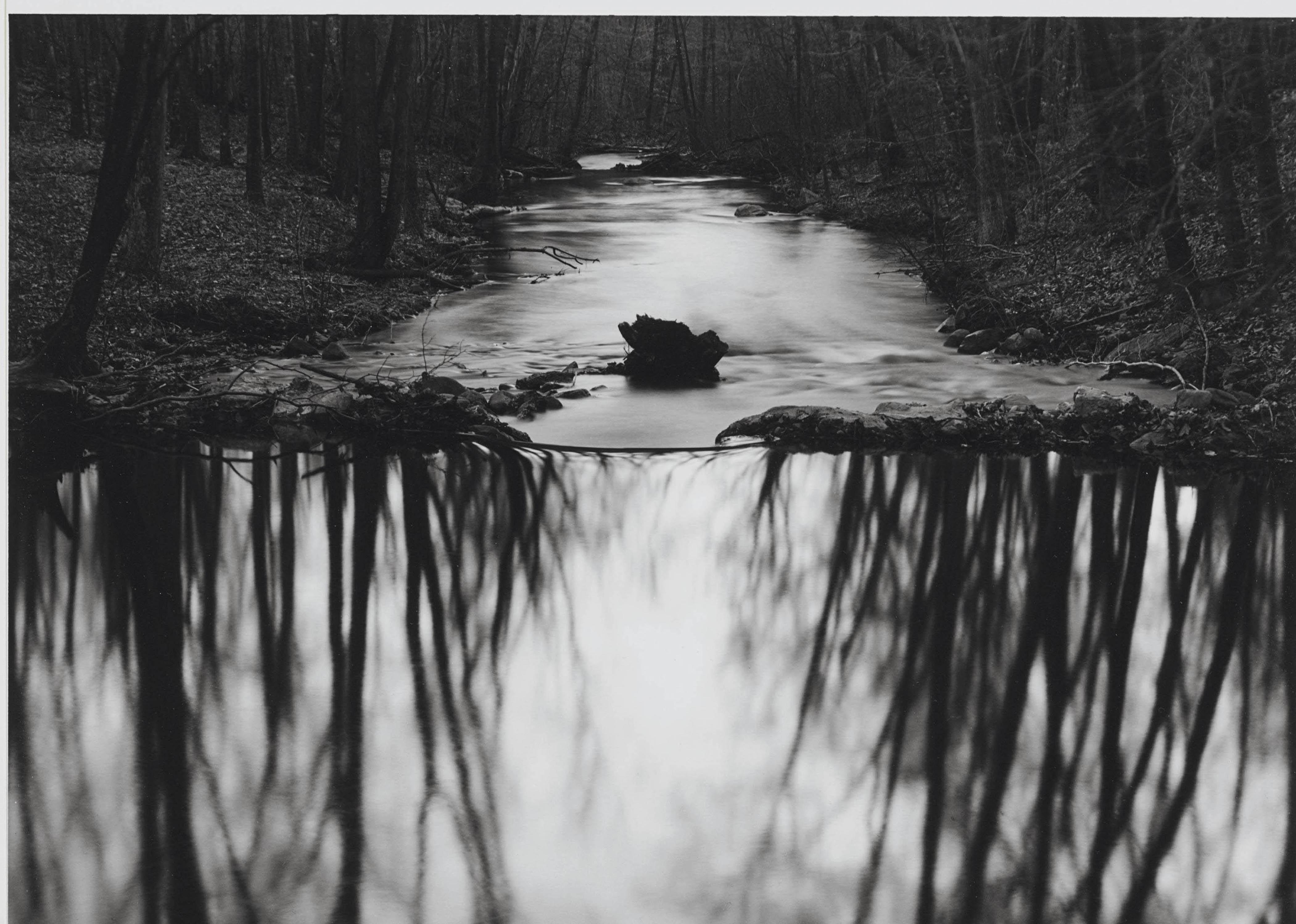 Woods Series, Redding, Connecticut, 1968