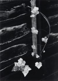 Ivy, Portland, Oregon, 1964