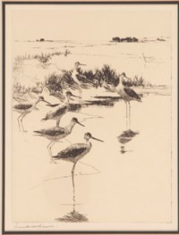 Birds: [two plates]