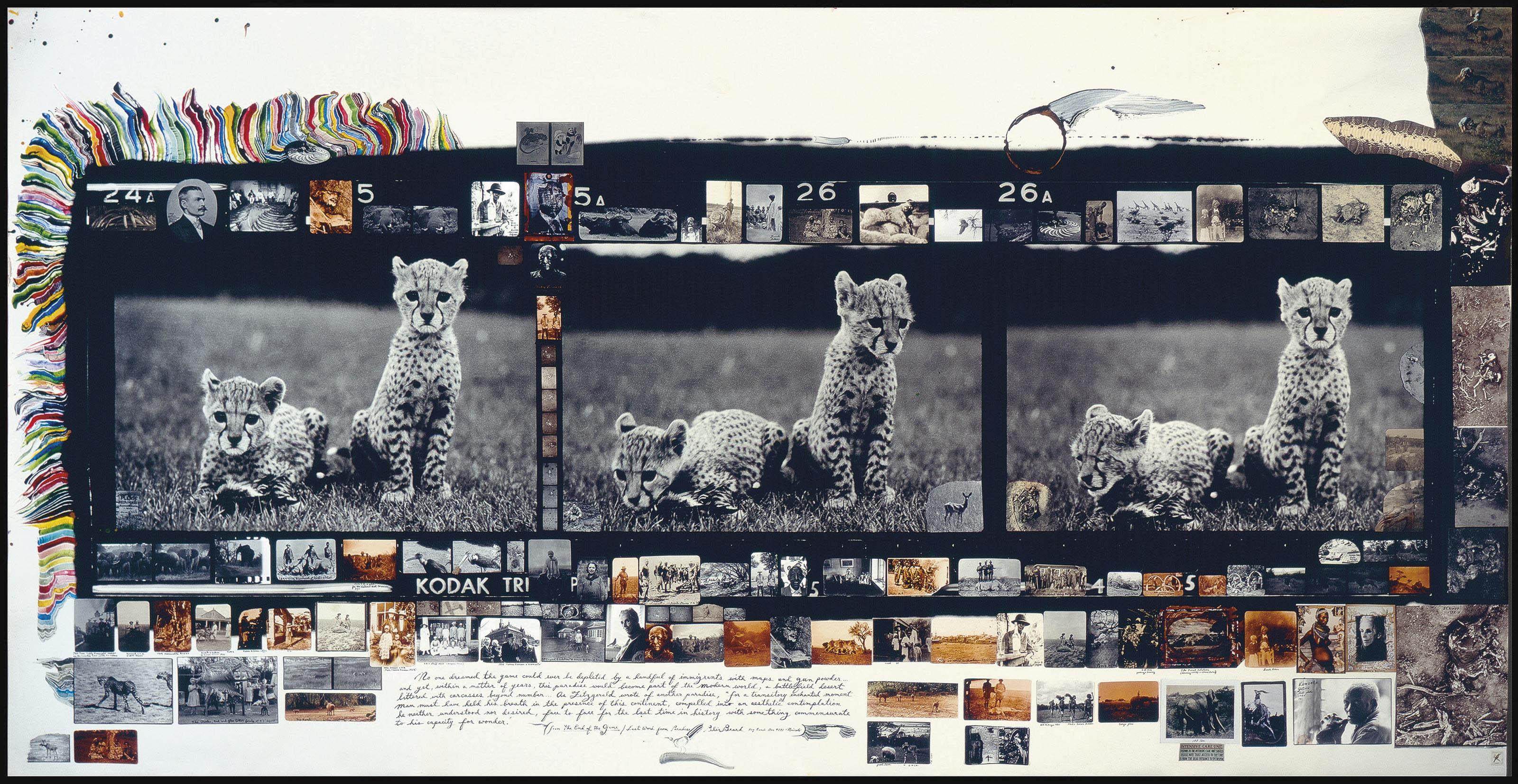 Orphan Cheetah Triptych, 1968