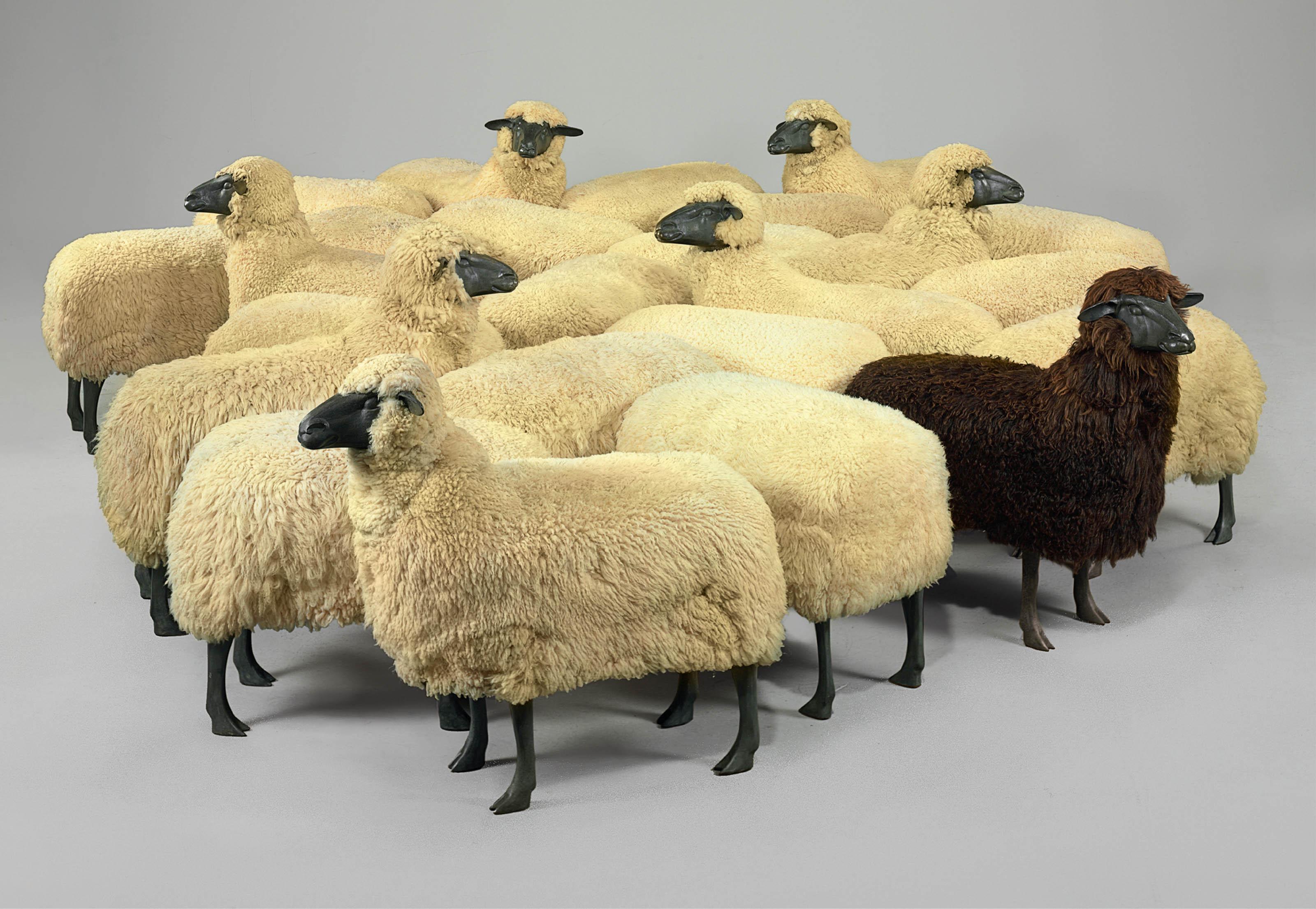 'Moutons de Laine', Un Troupeau de 24 Moutons