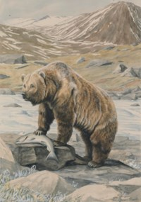 An Alaskan Brown Bear