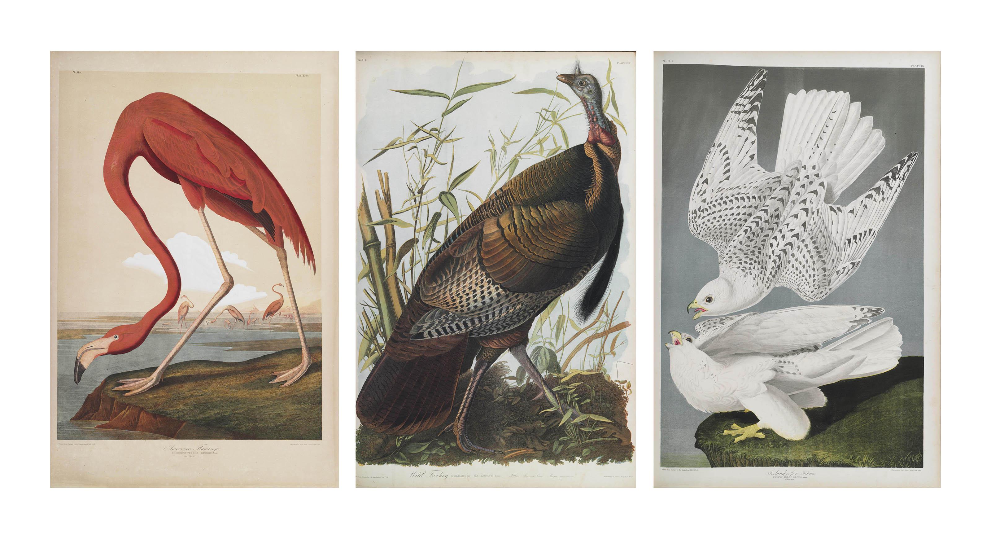 AUDUBON, John James (1785-1851). The Birds of America, from Original Drawings by John James Audubon... Reissued by J[ohn] W[oodhouse] Audubon. New York: Roe Lockwood & Son, 1860.