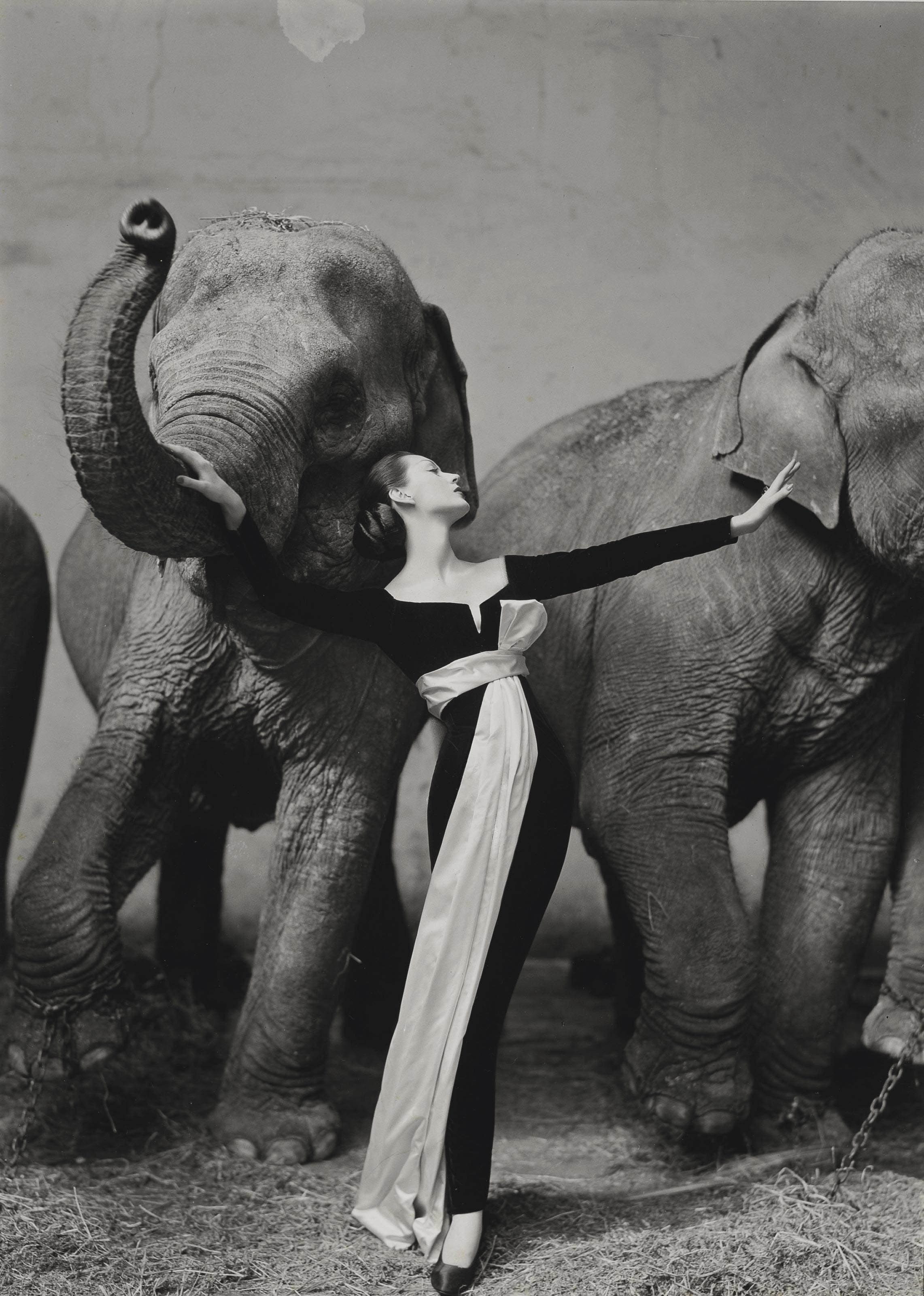 Dovima with elephants, Evening dress by Dior, Cirque d'Hiver, Paris, August 1955