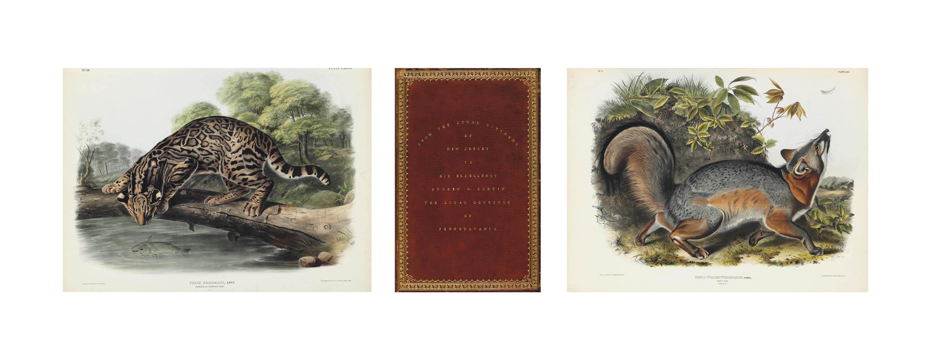 AUDUBON, John James and Rev. John BACHMAN. The Viviparous Quadrupeds of North America. New York: J.J. Audubon (-V.G. Audubon), 1845-[54].