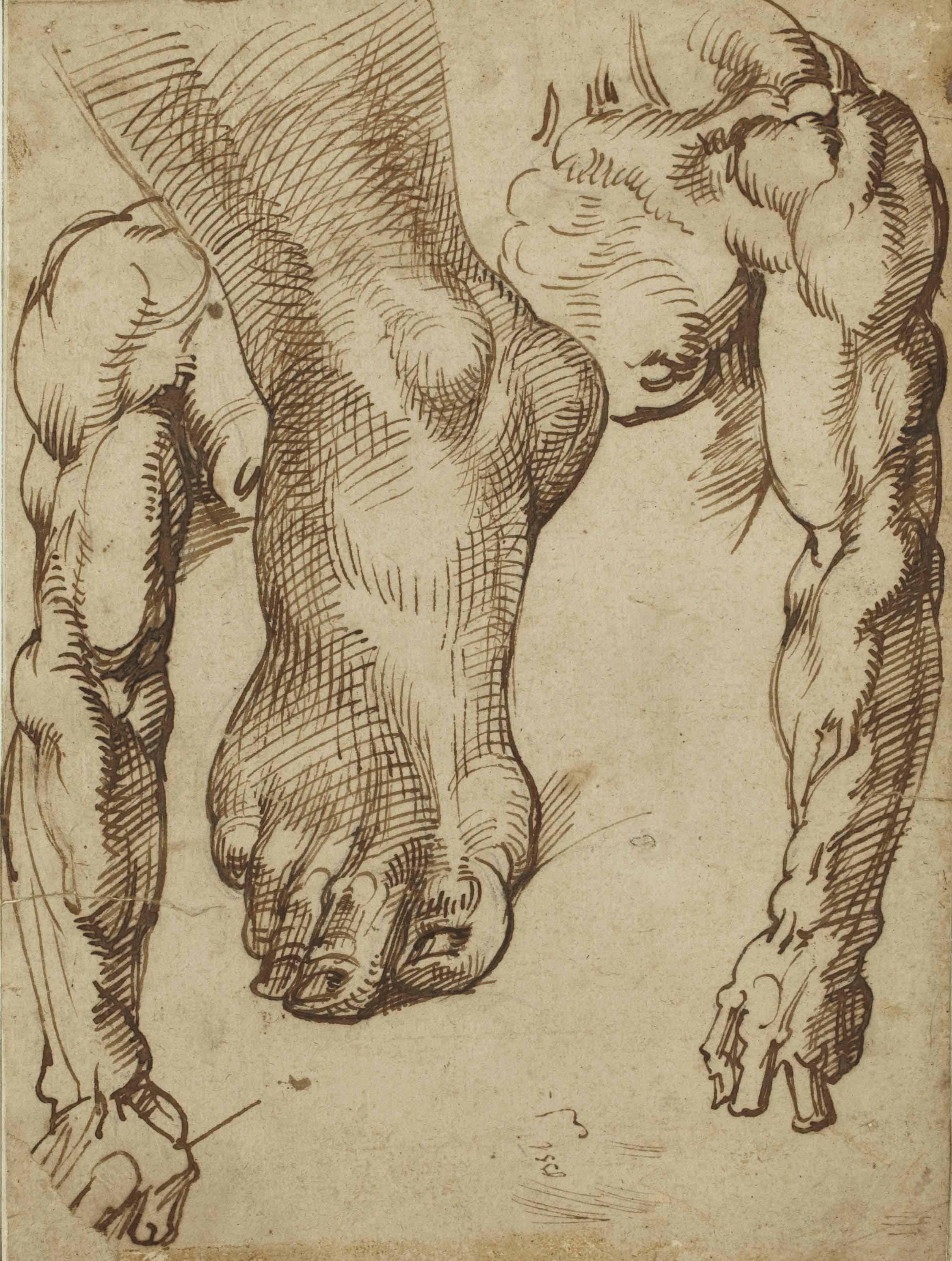 Etude de pied et de bras