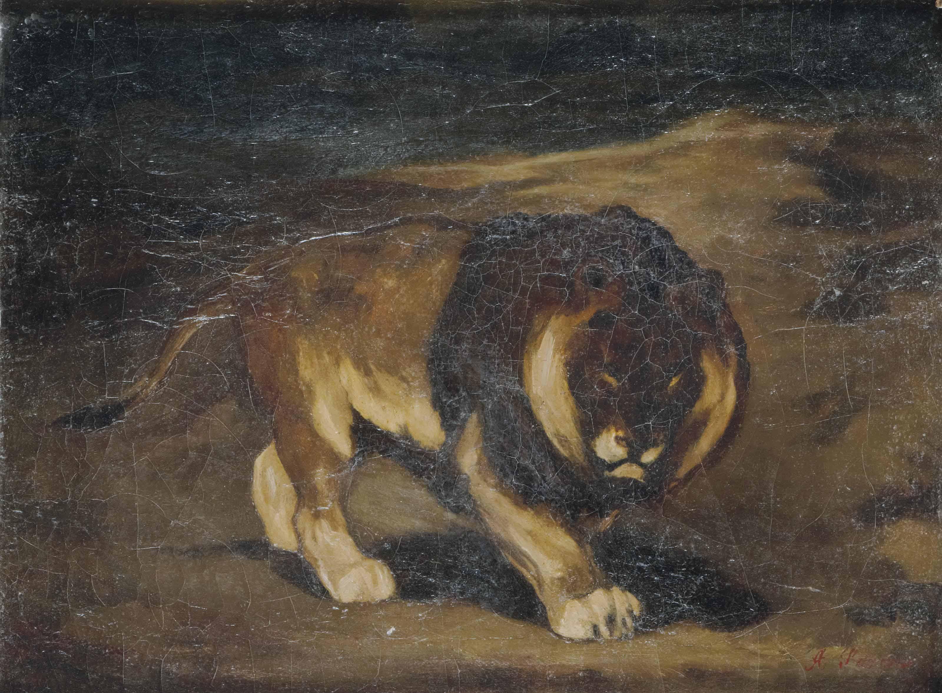 Le lion du Cap à crinière noire