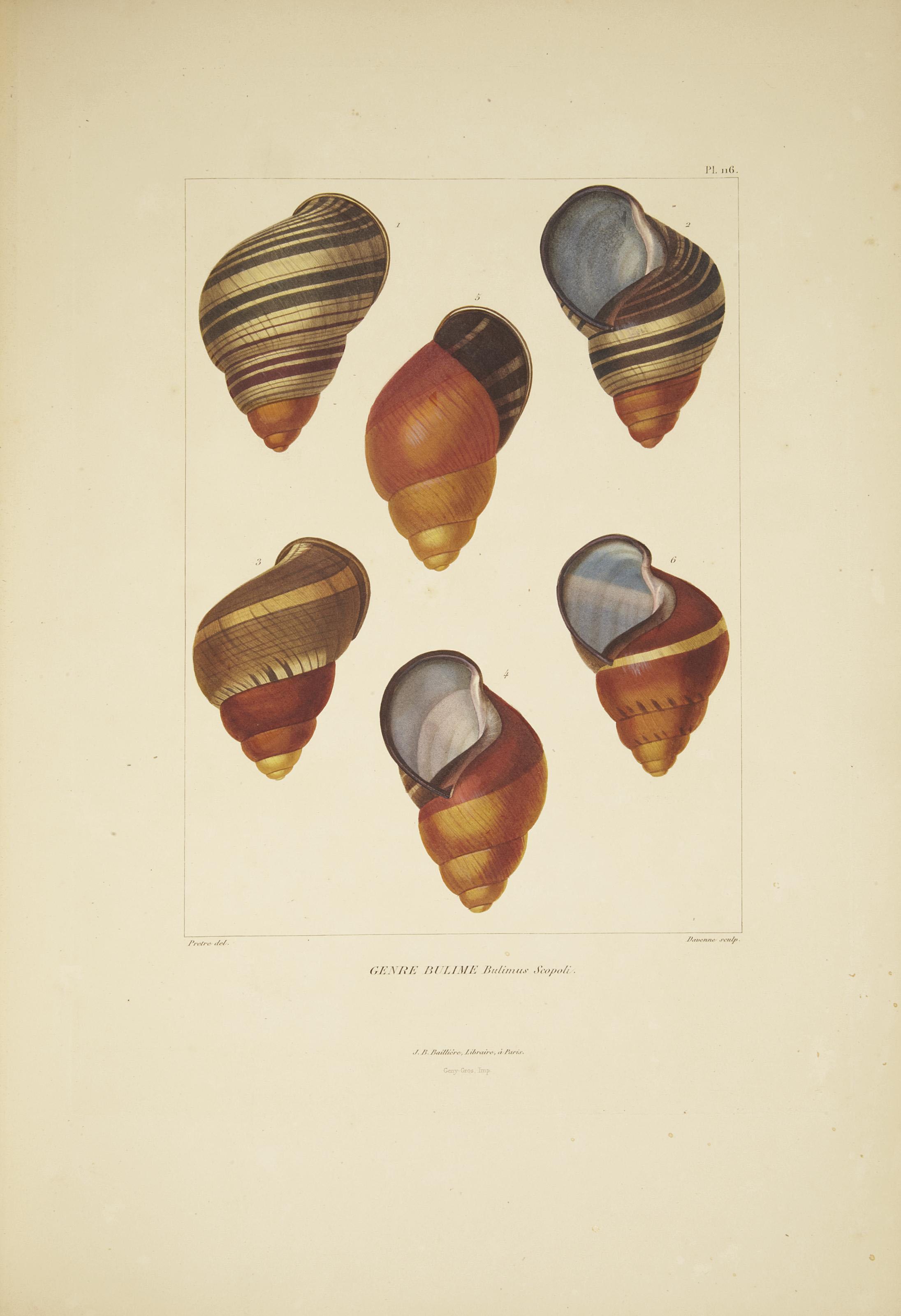 FÉRUSSAC, D. de (1786-1836) et DESHAYES, Gérard-Paul (1795-1875). Histoire naturelle générale et particulière des mollusques terrestres et fluviatiles... Paris: J.-B. Baillière, 1820-1851.