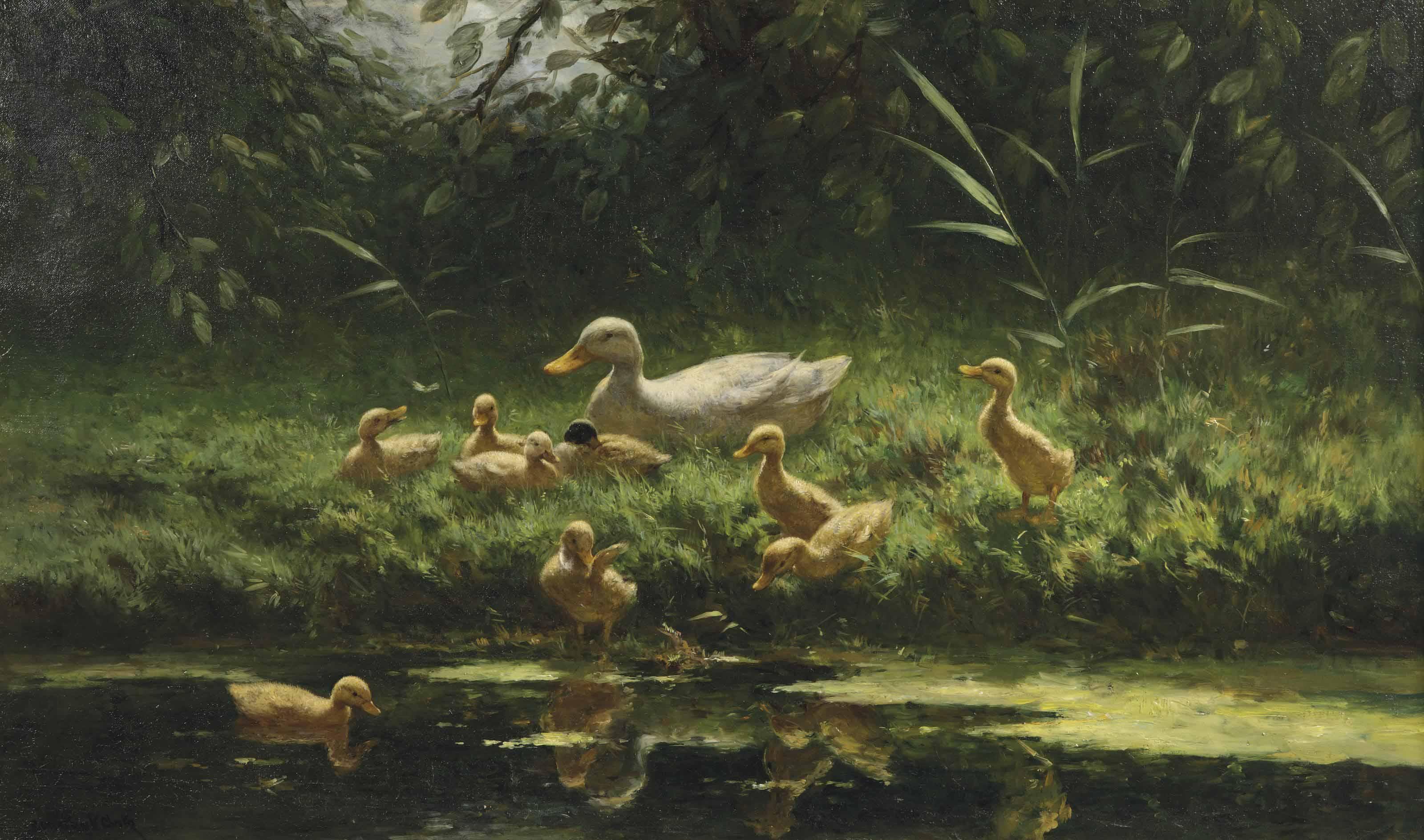 Ducklings on a sunlit riverbank