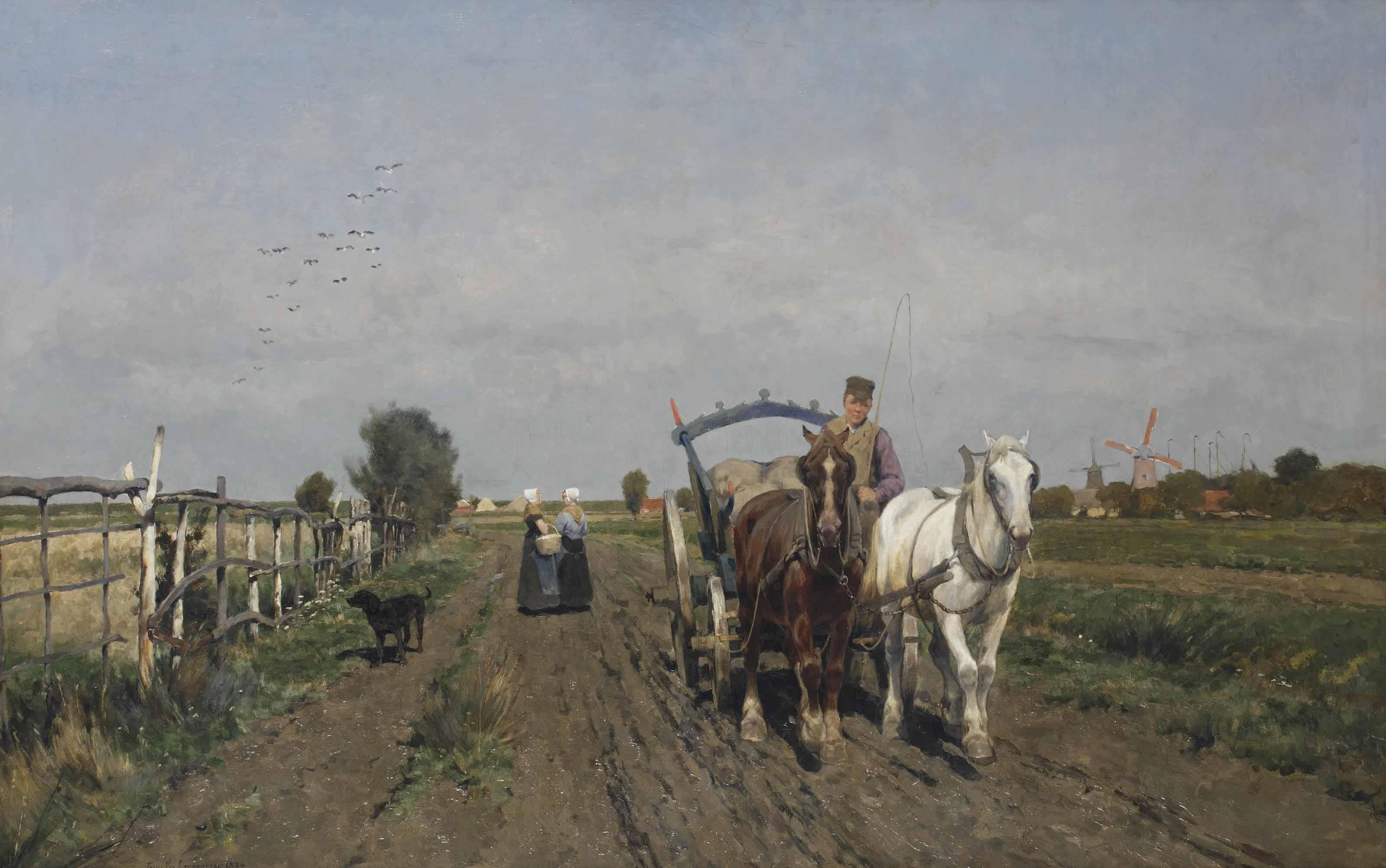 Horses on a path