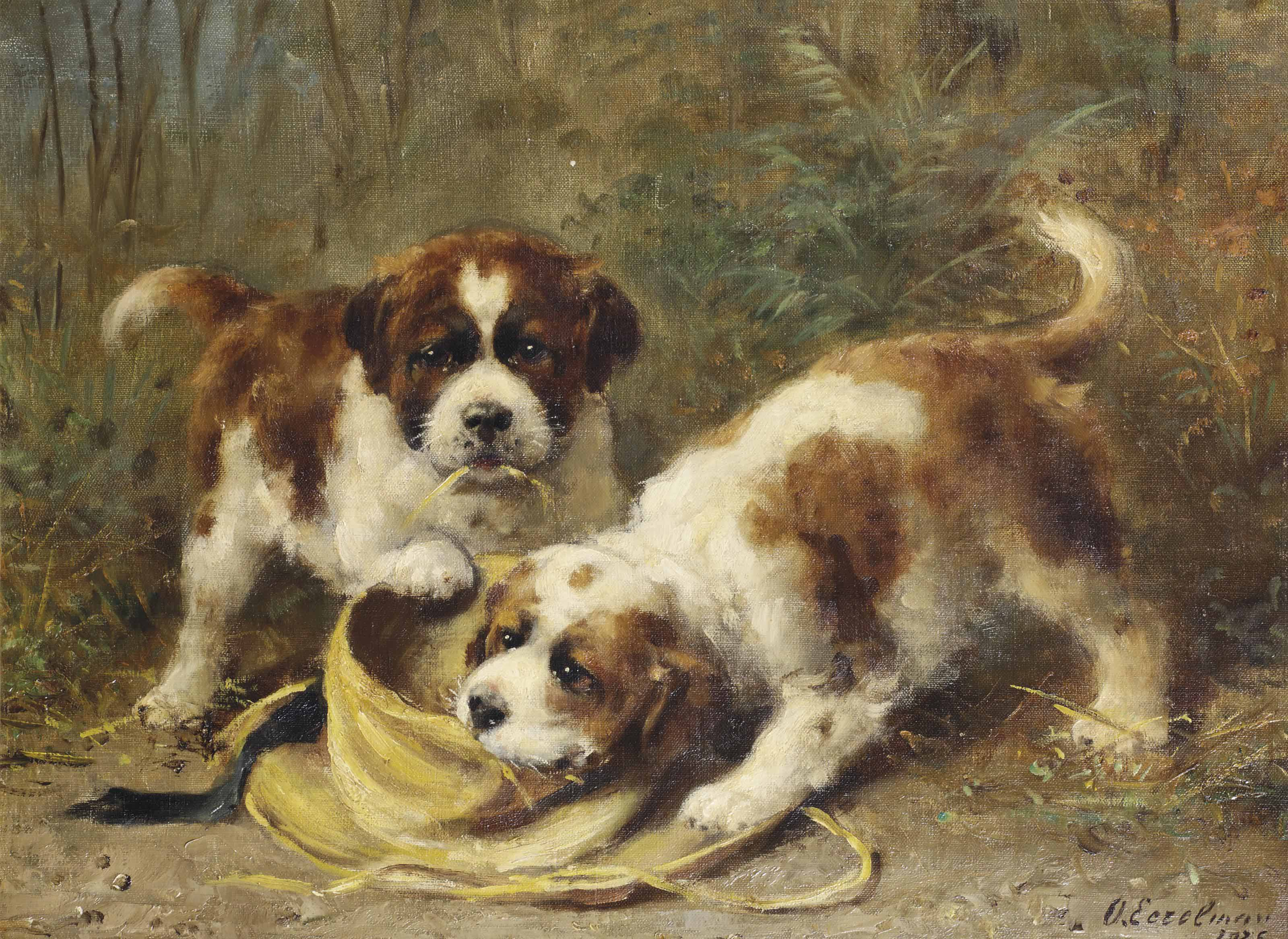 Two Saint-Bernard puppies playing with a hat