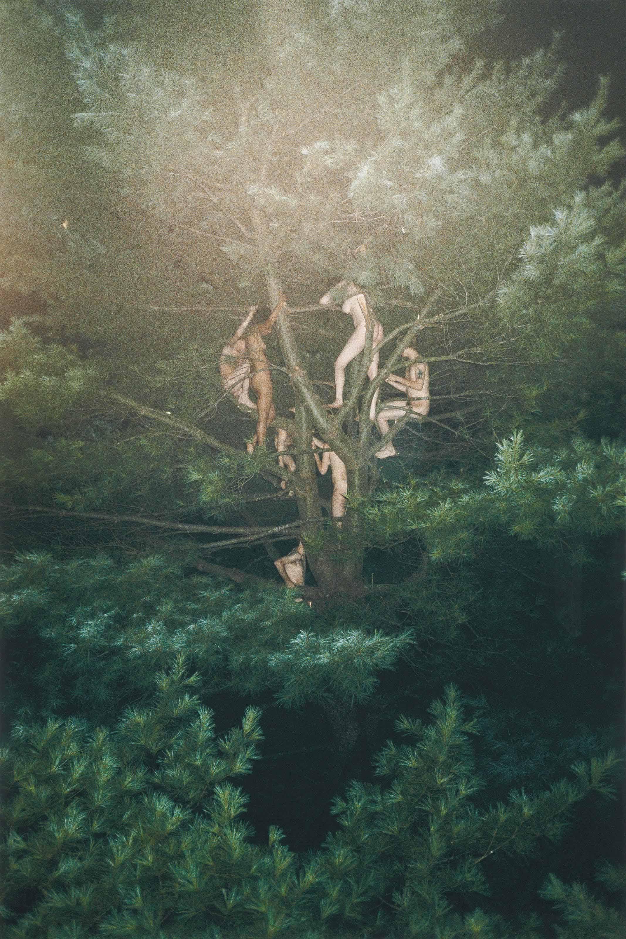 Ryan Mcginley B 1977 Tree 3 Christie S